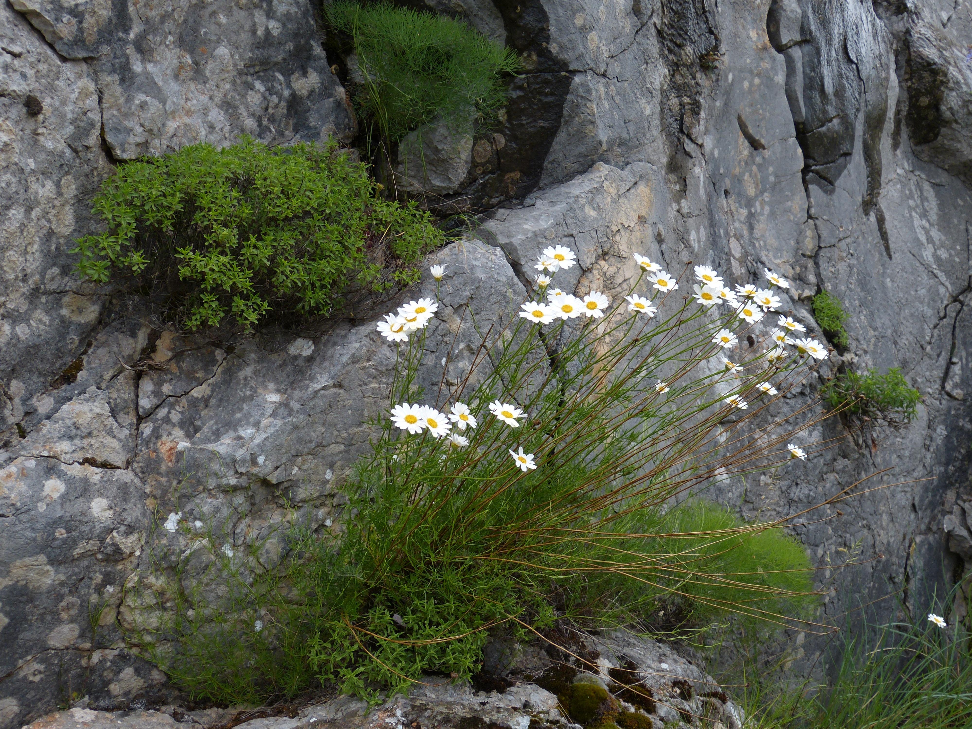 Fotos gratis rbol naturaleza rock desierto planta for Arboles para plantar en verano