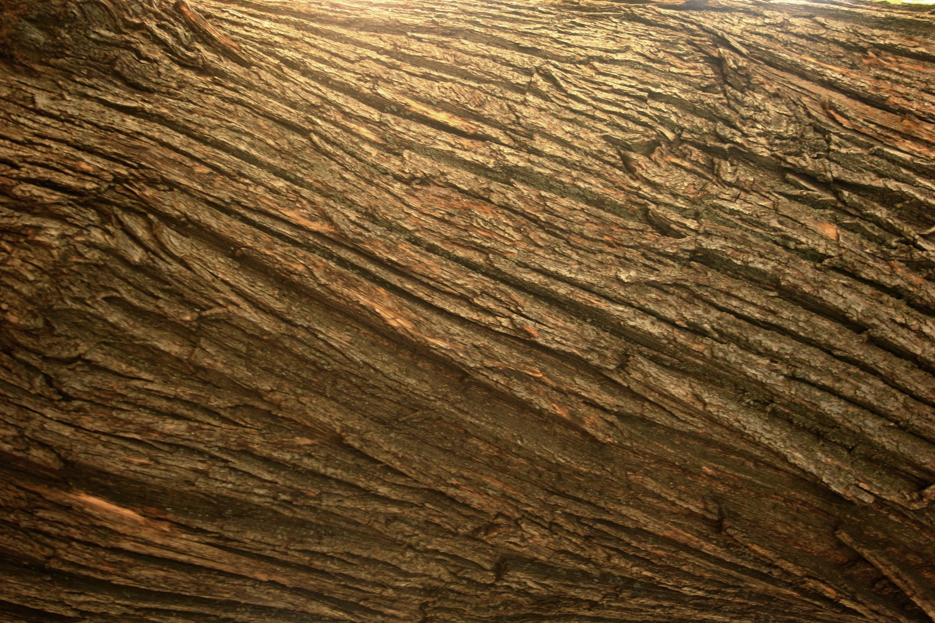 Laminat textur hd  Kostenlose foto : Baum, Natur, Rock, Holz, Textur, Stock ...