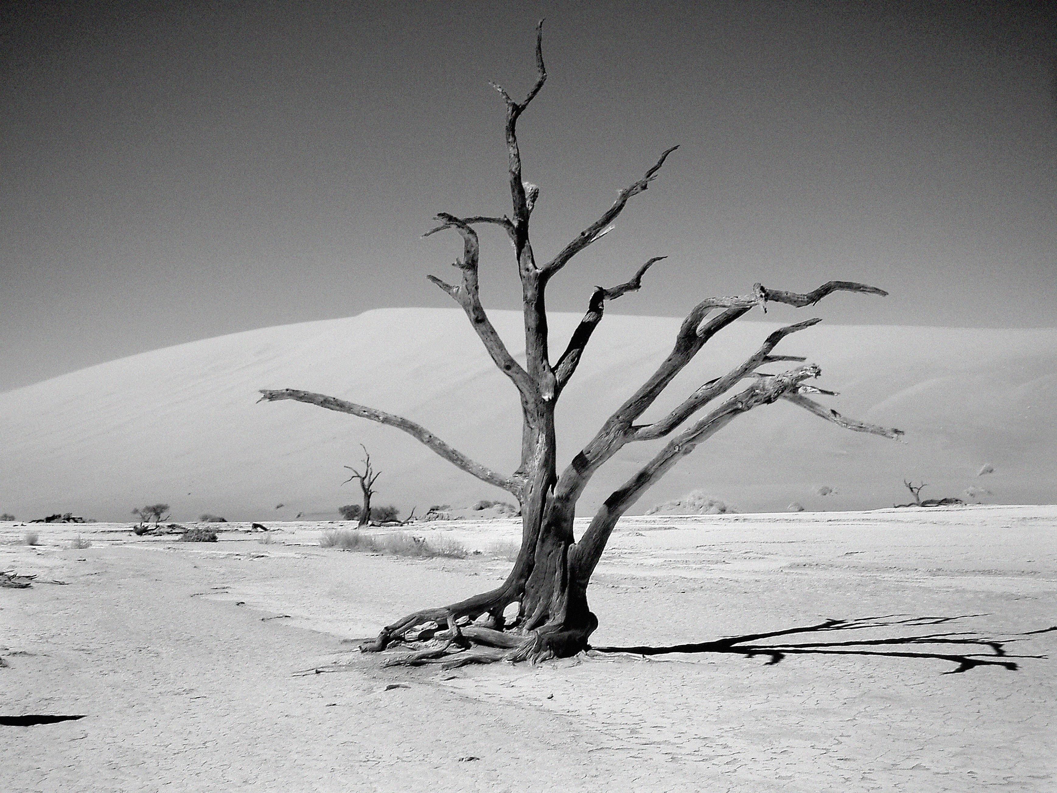 Gambar Pohon Alam Pasir Cabang Salju Musim Dingin