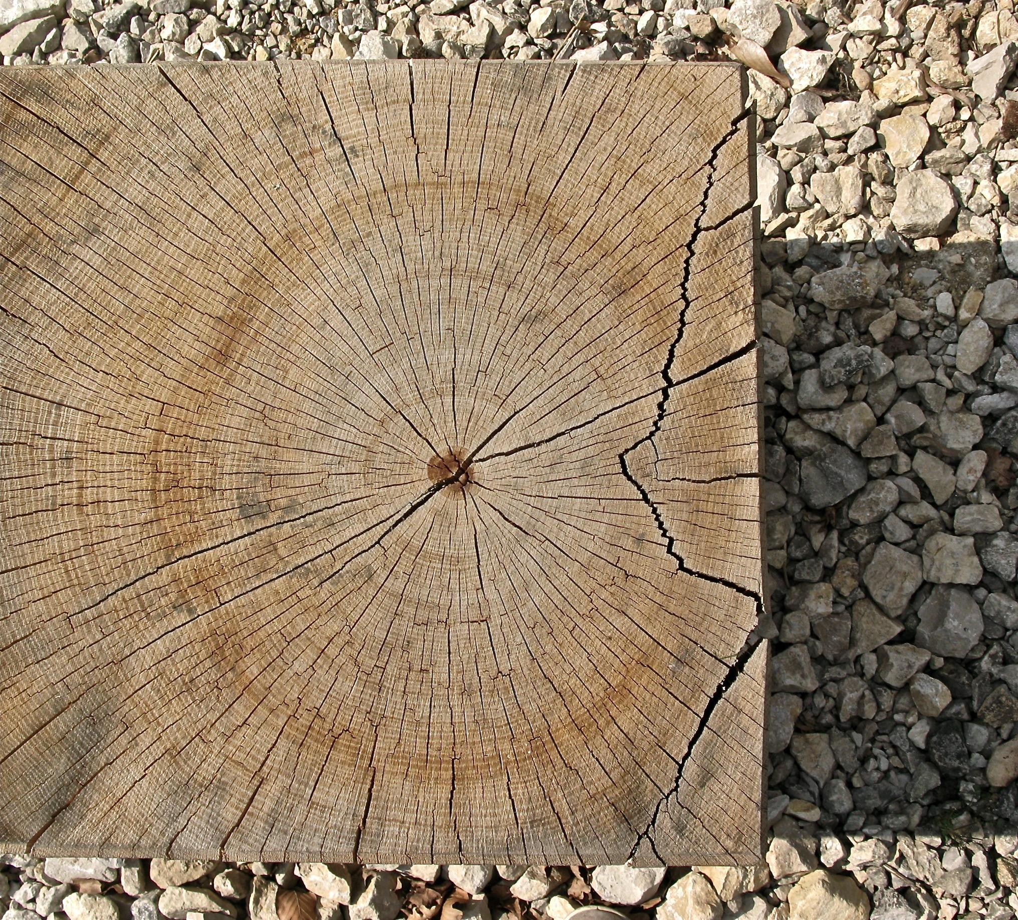 Fotos gratis : árbol, naturaleza, estructura, madera, el maletero ...