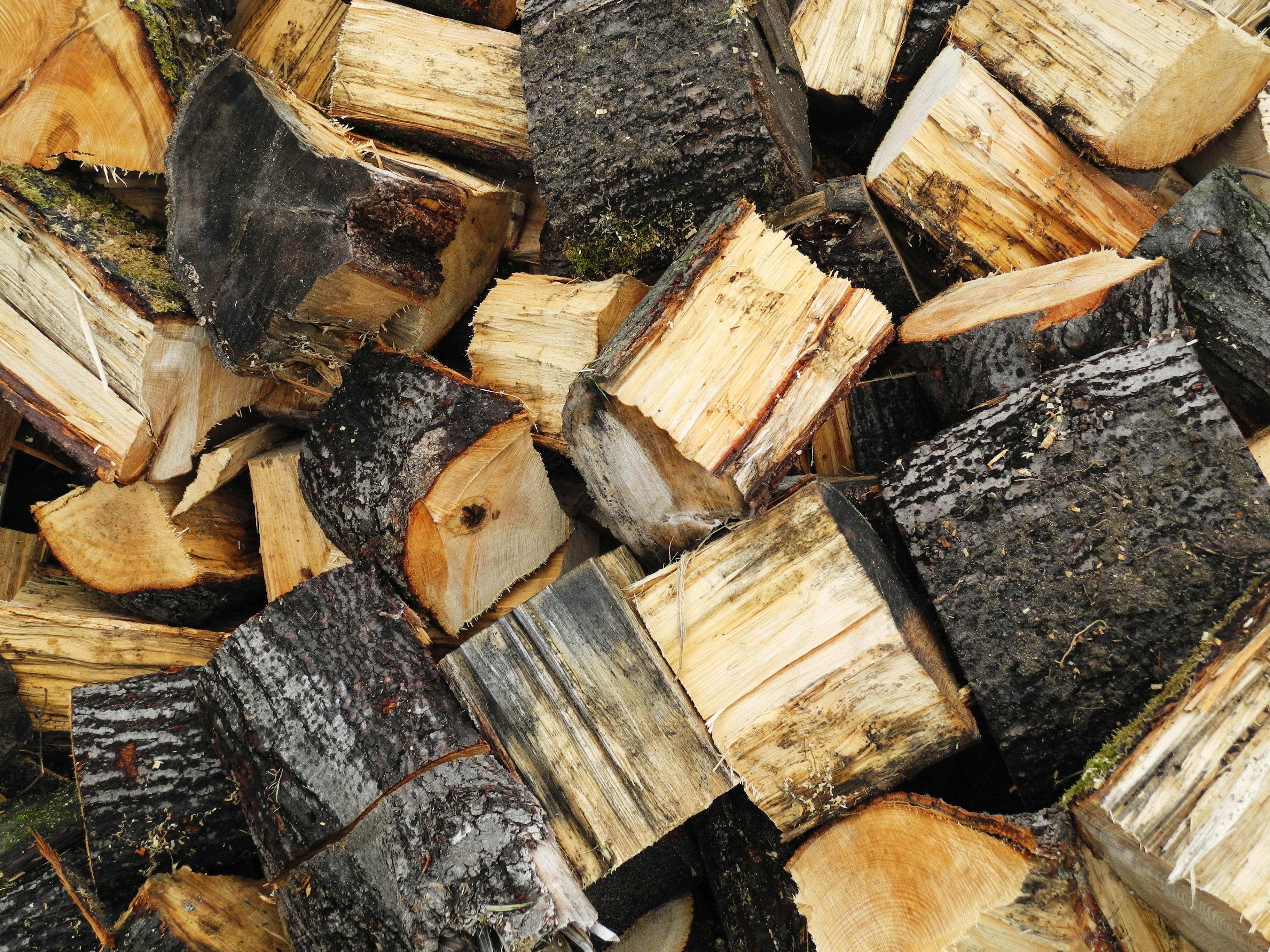 Tree Nature Winter Wood Trunk Bark Autumn Lumber Heat Material Storage Logs  Carving Rings Tree Bark