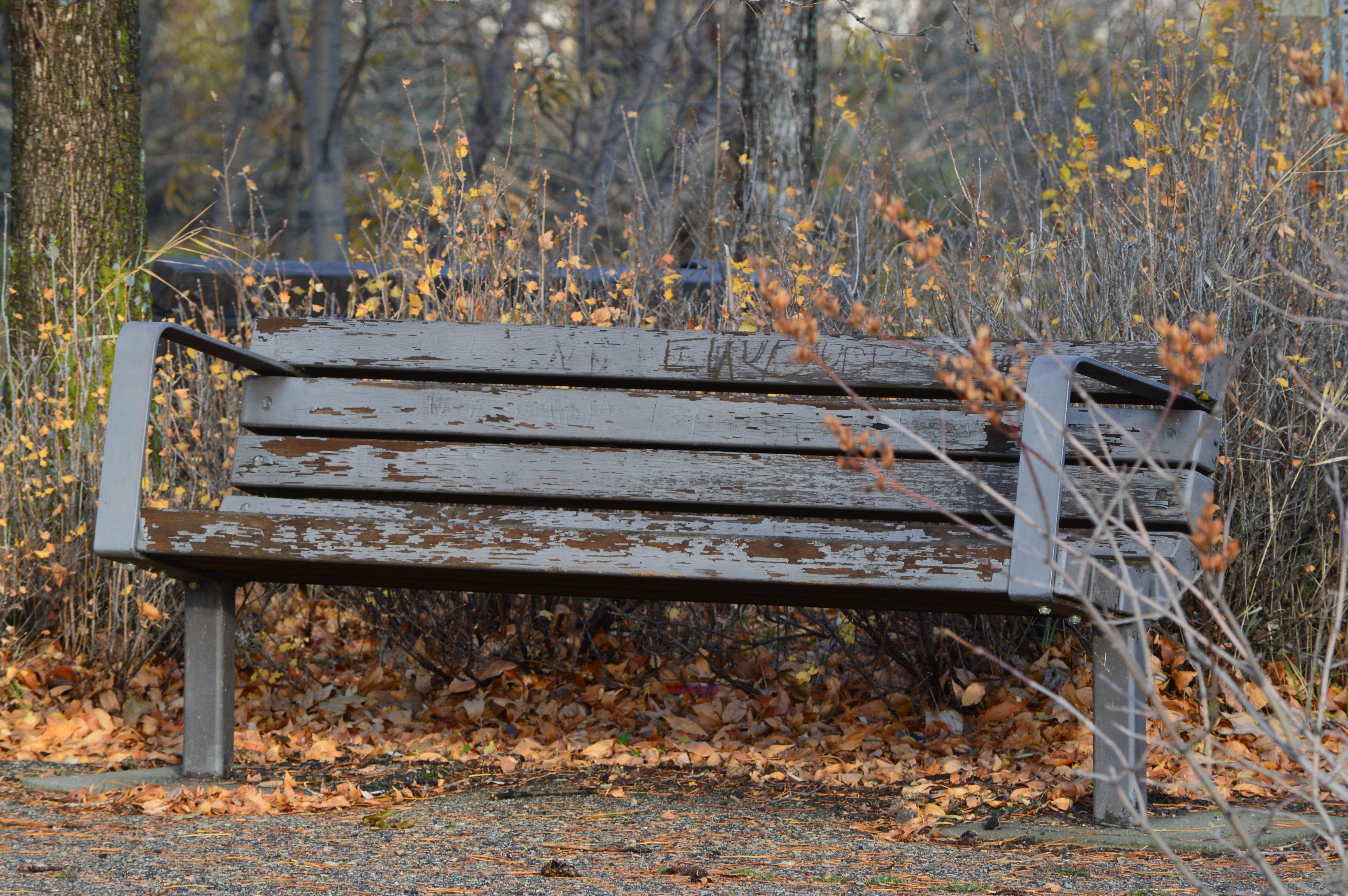 кто старые скамейки картинки фото диета особая система