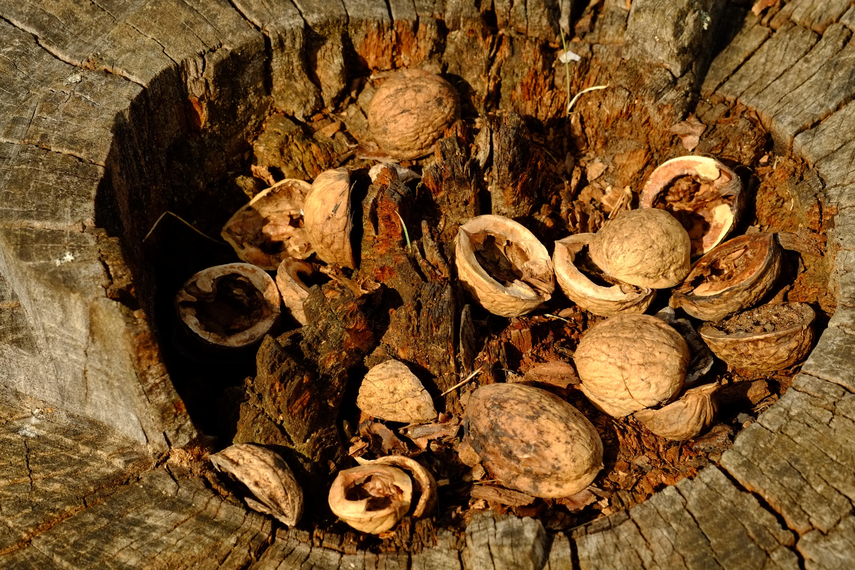 Free Images : nature, wood, leaf, trunk, log, consumption