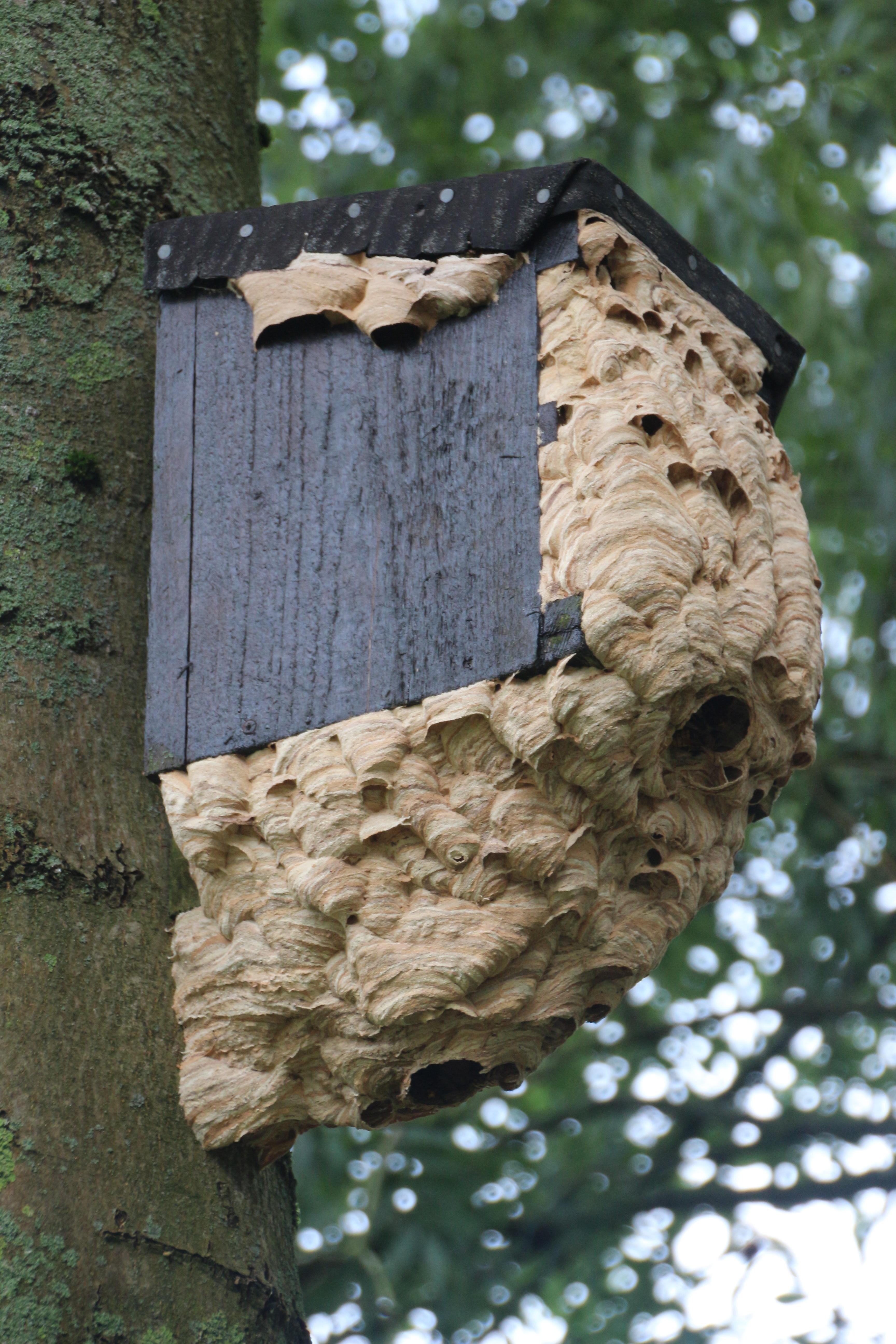 banco de imagens rvore natureza madeira folha tronco animais selvagens inseto. Black Bedroom Furniture Sets. Home Design Ideas