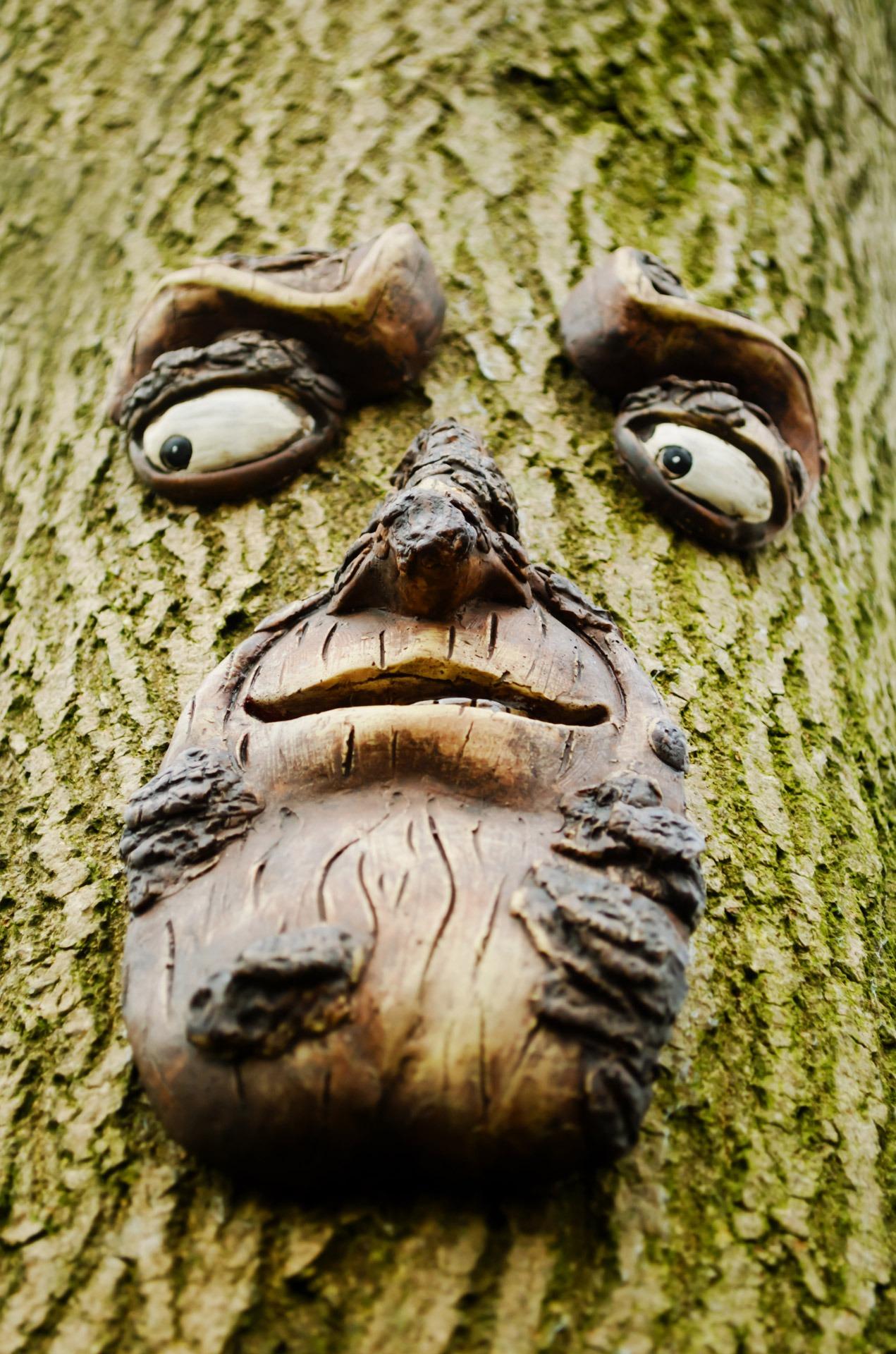 критическом фотография вживленная в дерево картинки территории