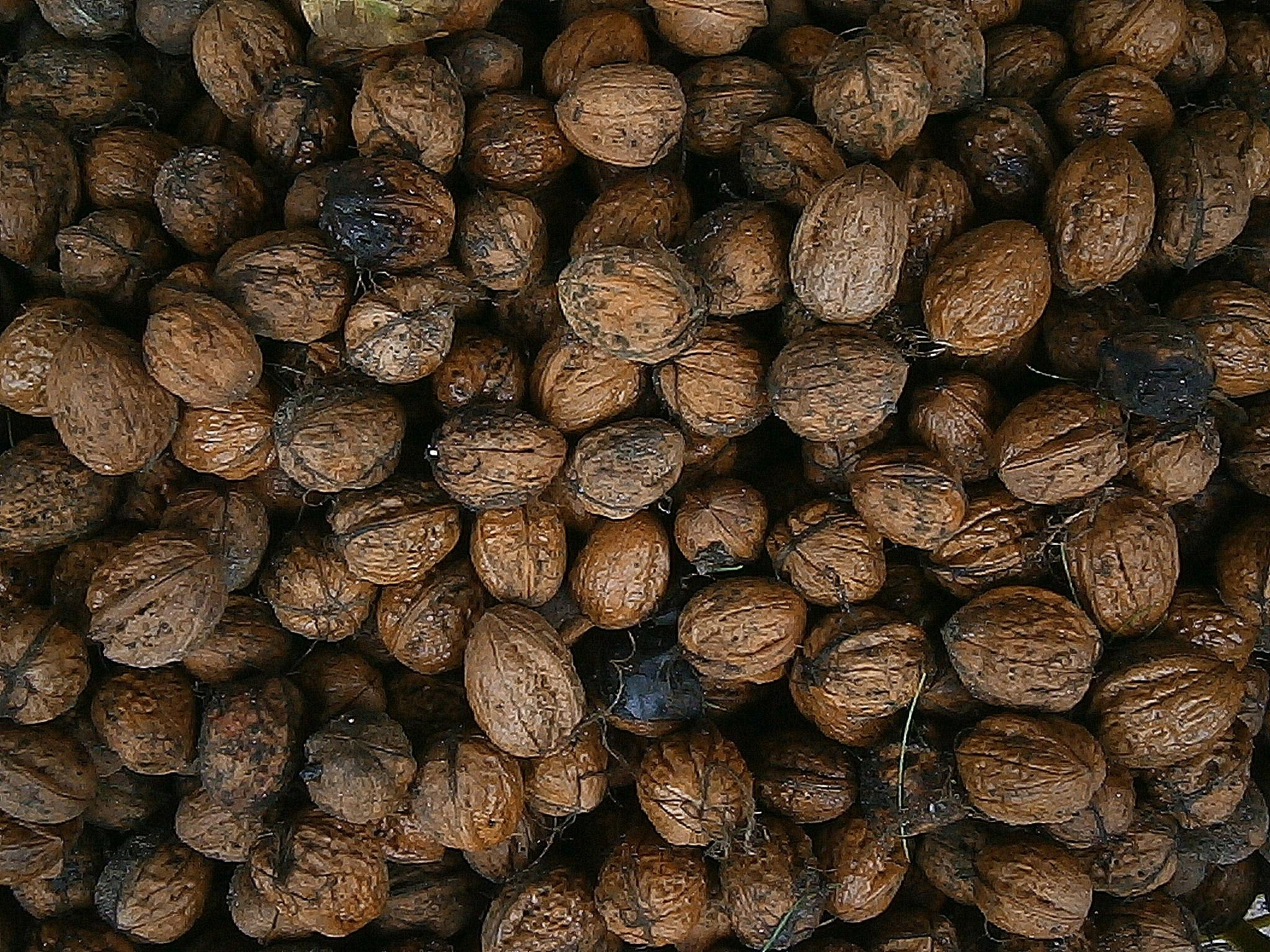 картинка ореха ели лучшие обои для