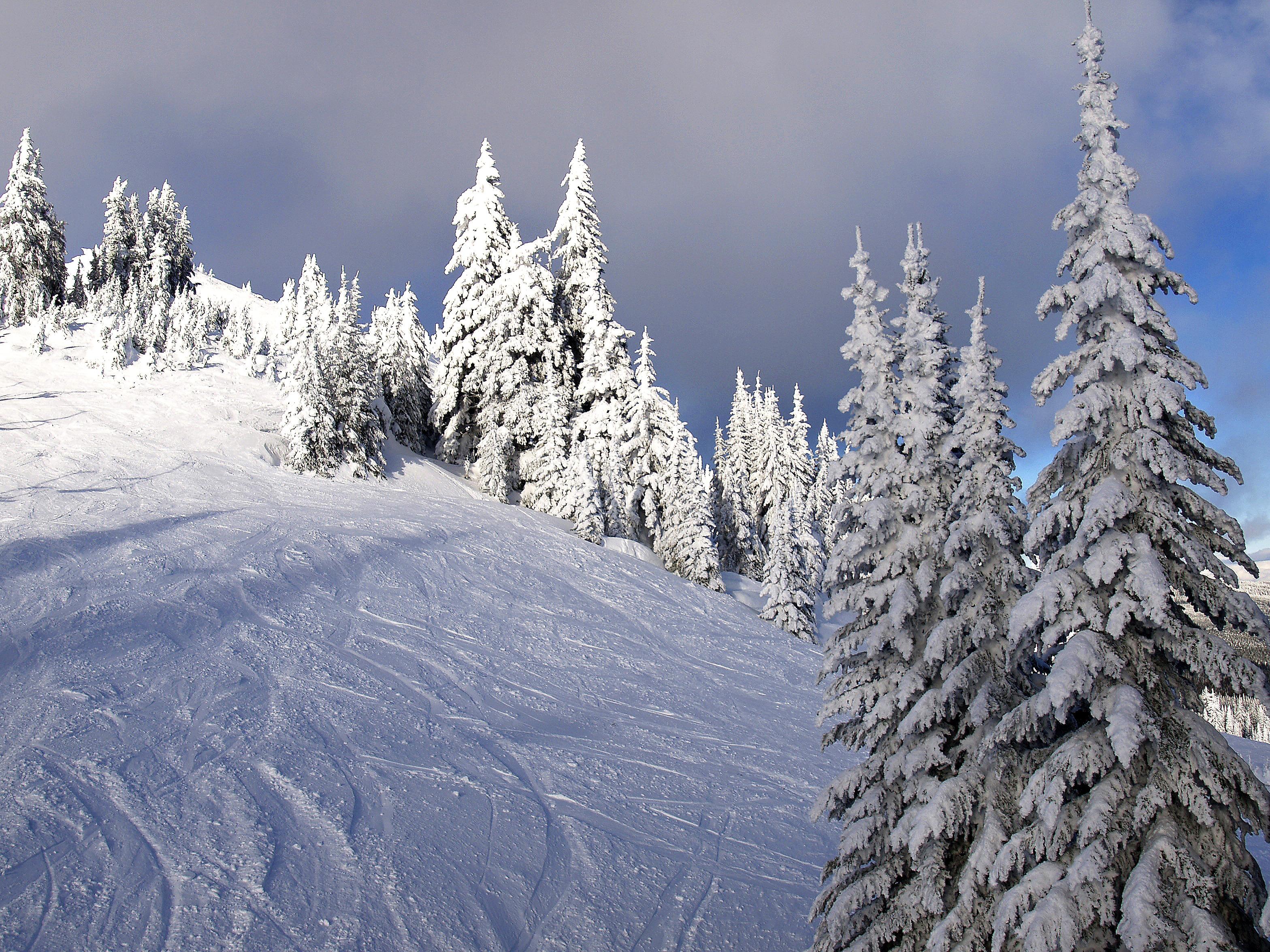 Immagini Belle : albero, allaperto, montagna, la neve, freddo ...