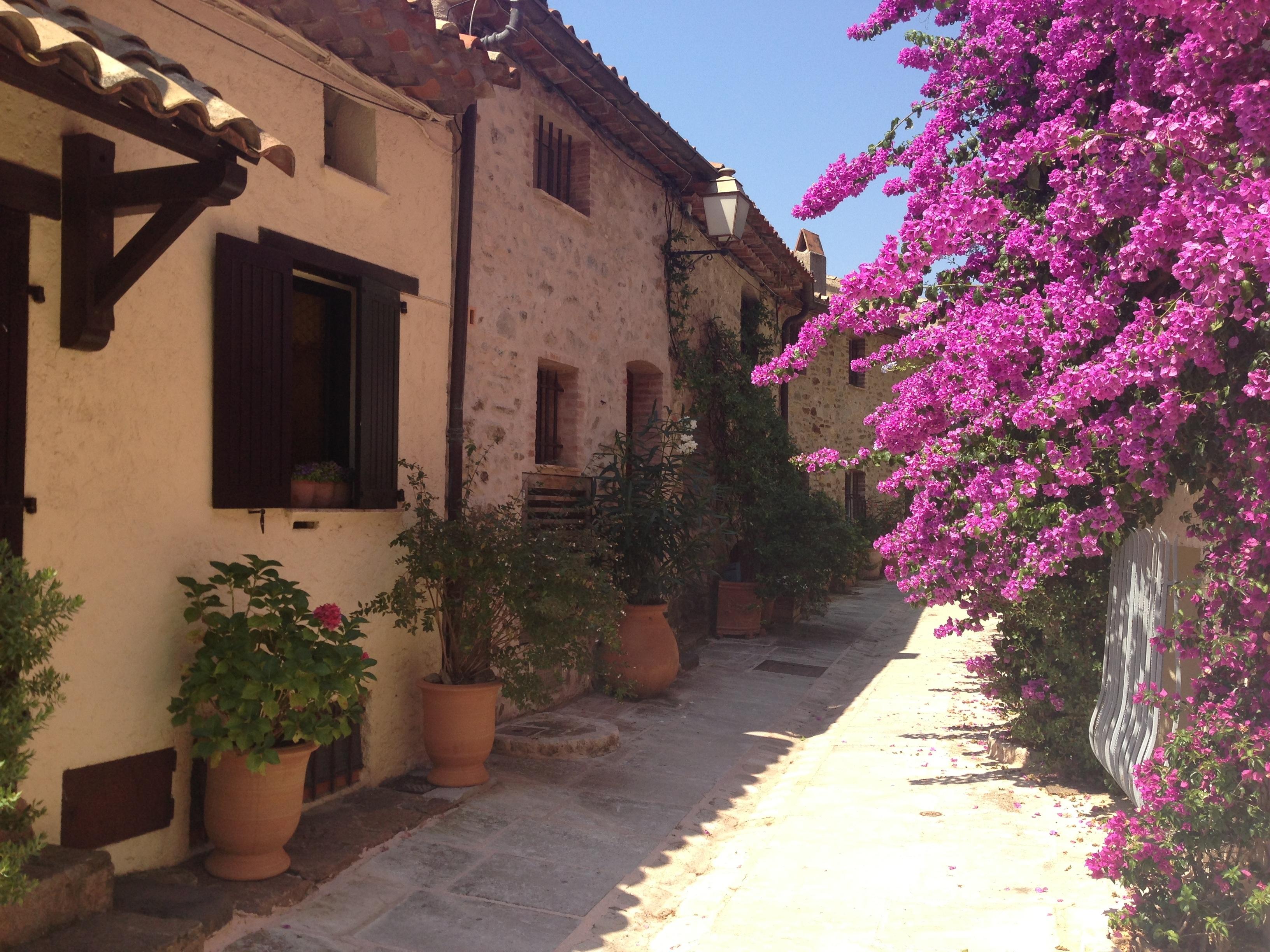 Free images tree outdoor plant street villa house for Plant de villa