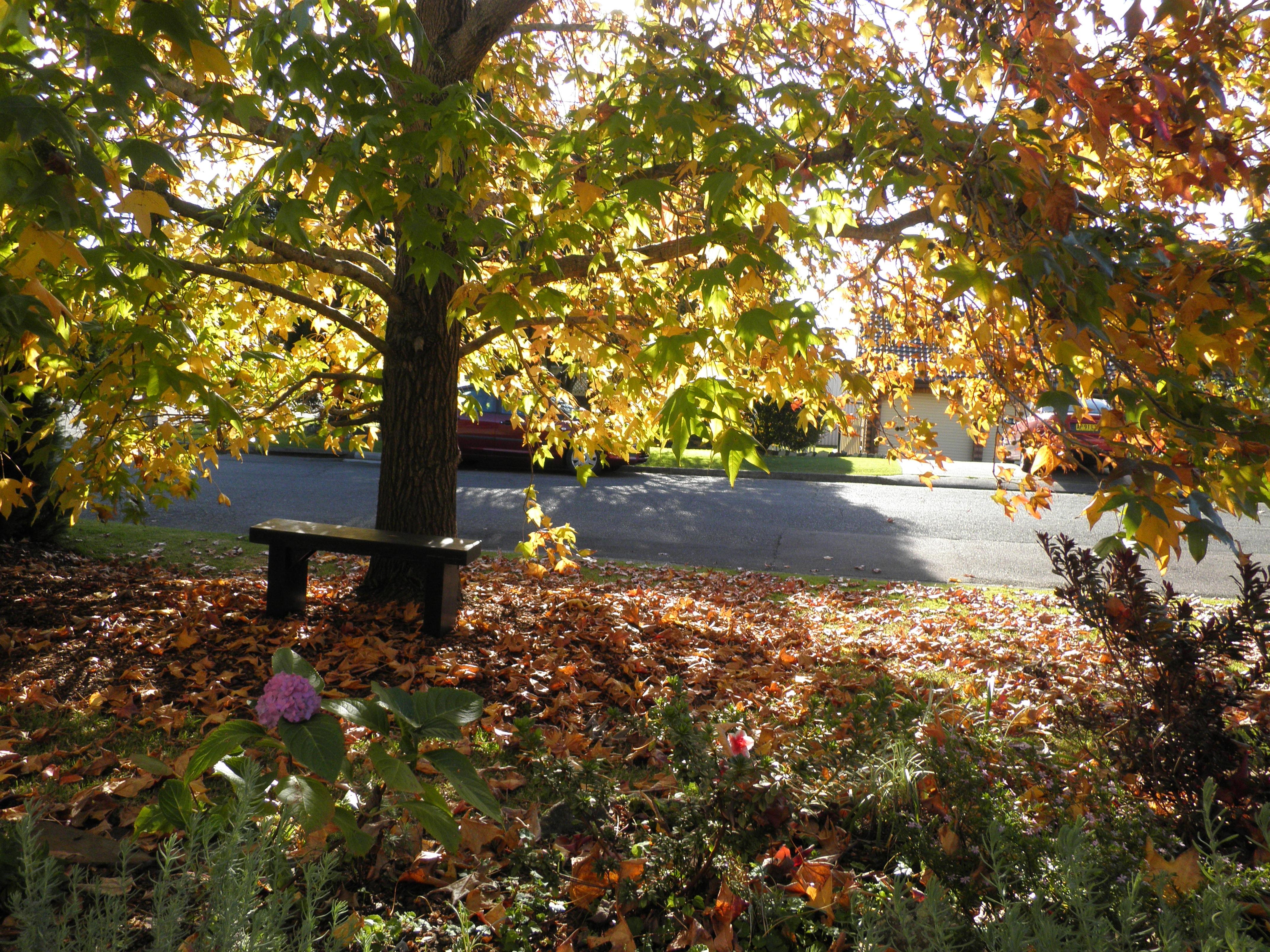 заявляют, картинки осень на дворе давно уже стала