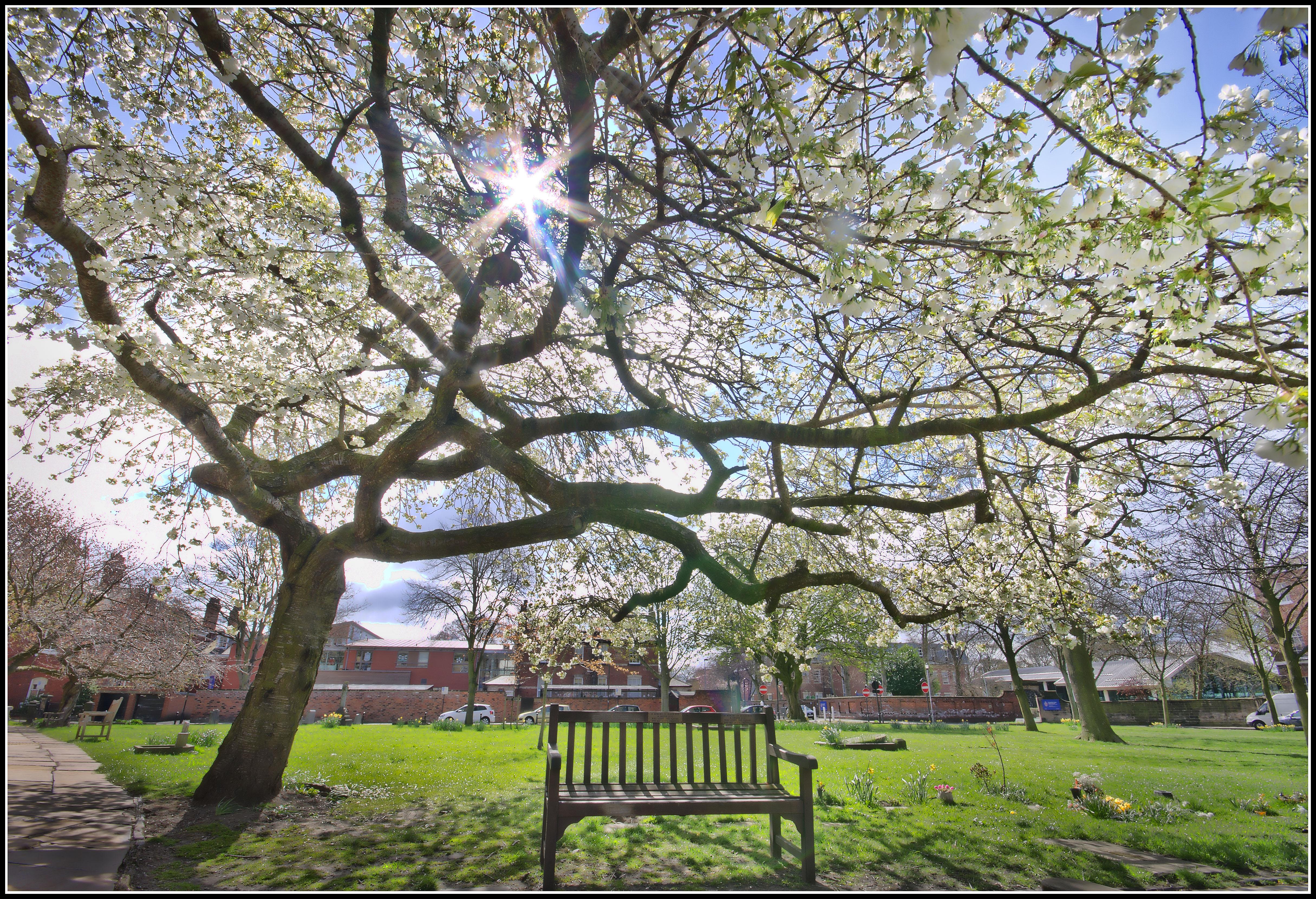 무료 이미지 나무 통로 잔디 분기 목재 햇빛 벤치 좌석 봄 녹색 공원 식물학
