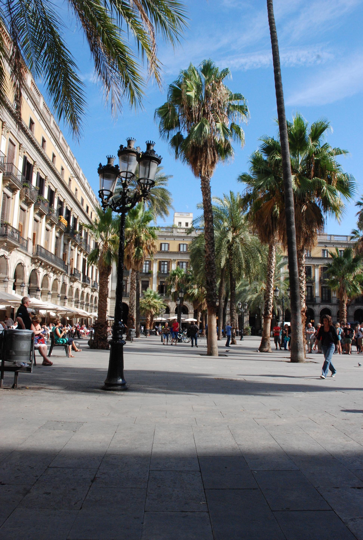 palmier ville