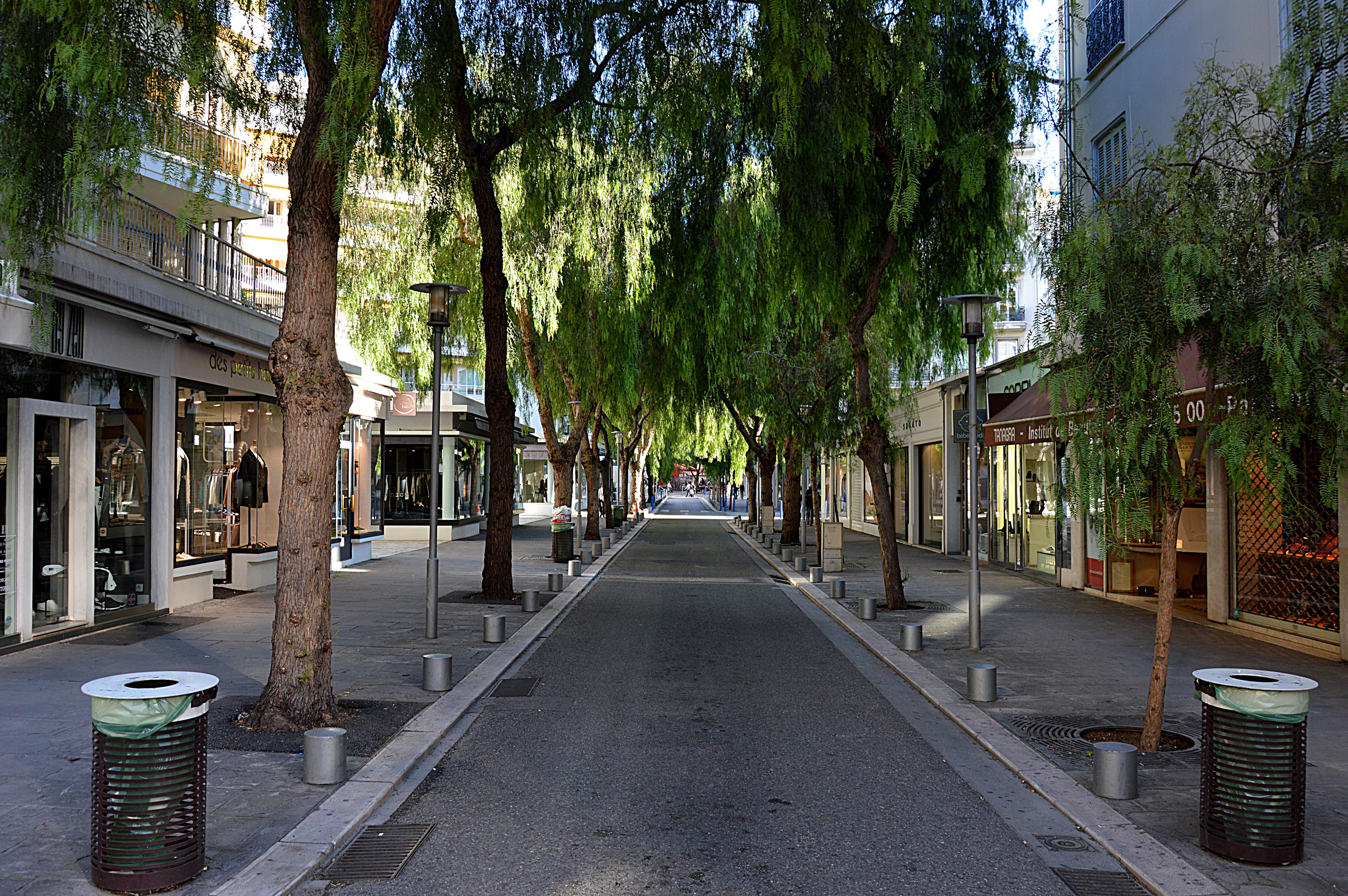картинки деревьев на улицах его называют