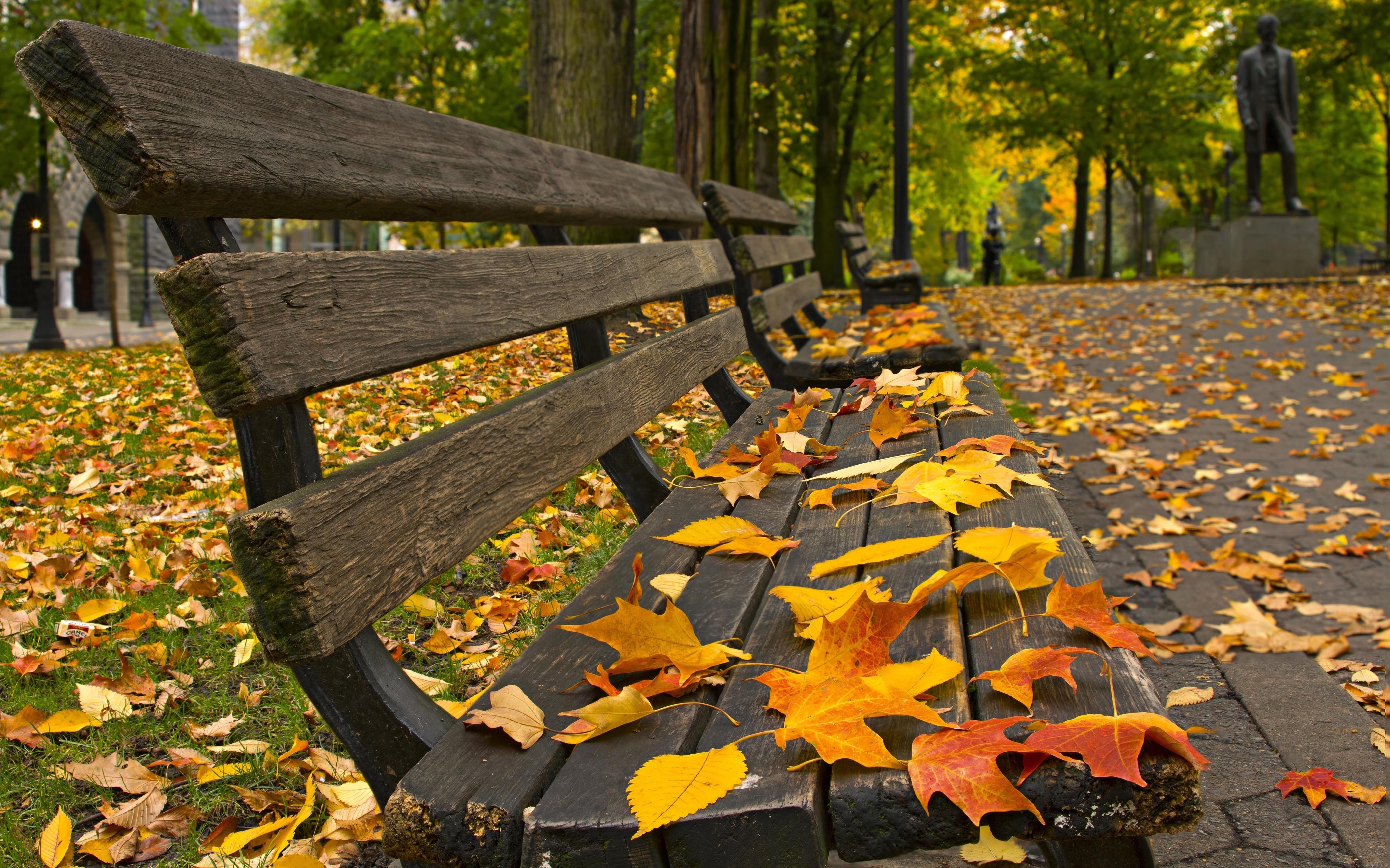 Лавочка дерево листья осень скачать
