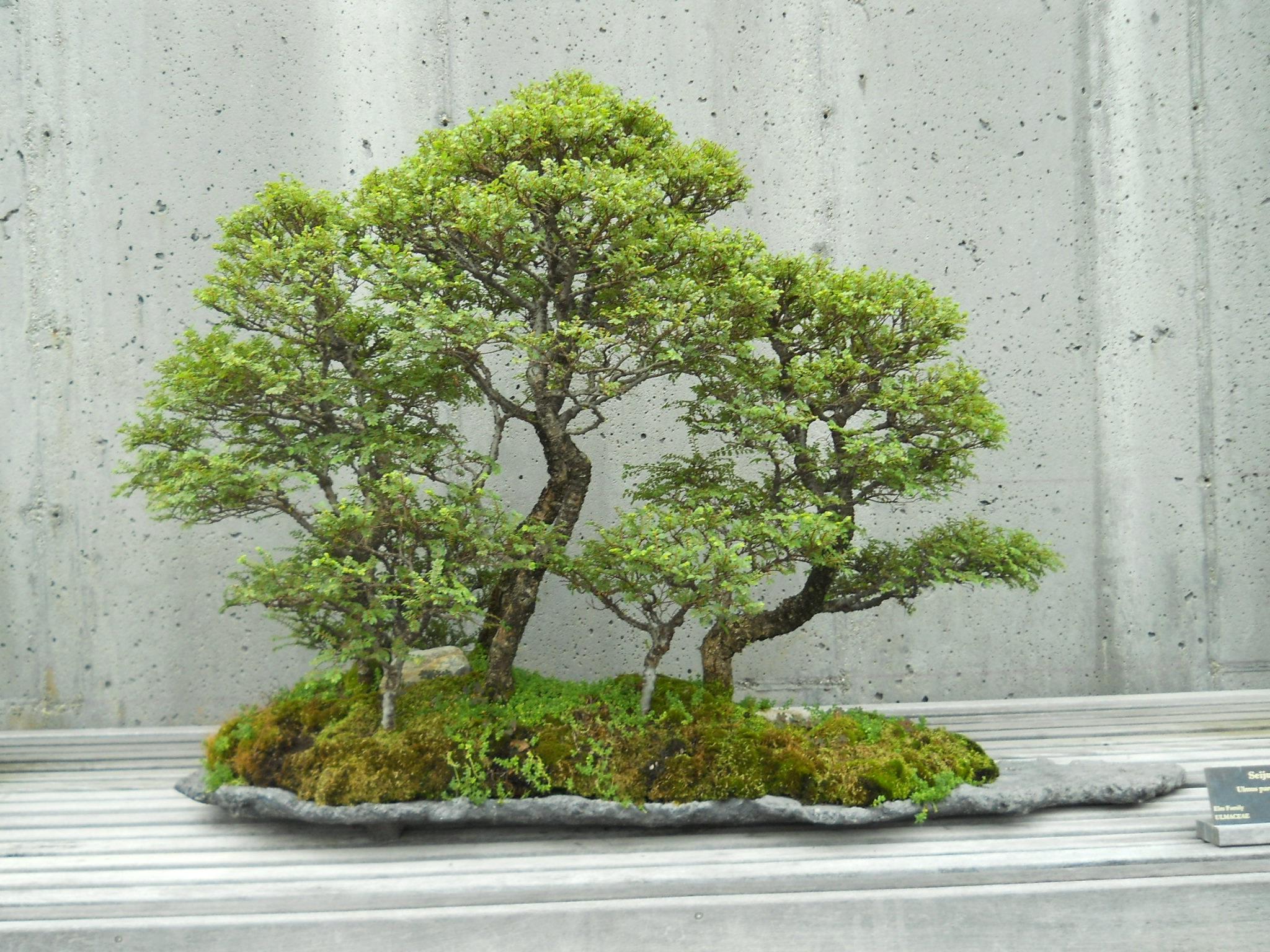 Gambar Pohon Menanam Dekorasi Taman Jepang Tanaman