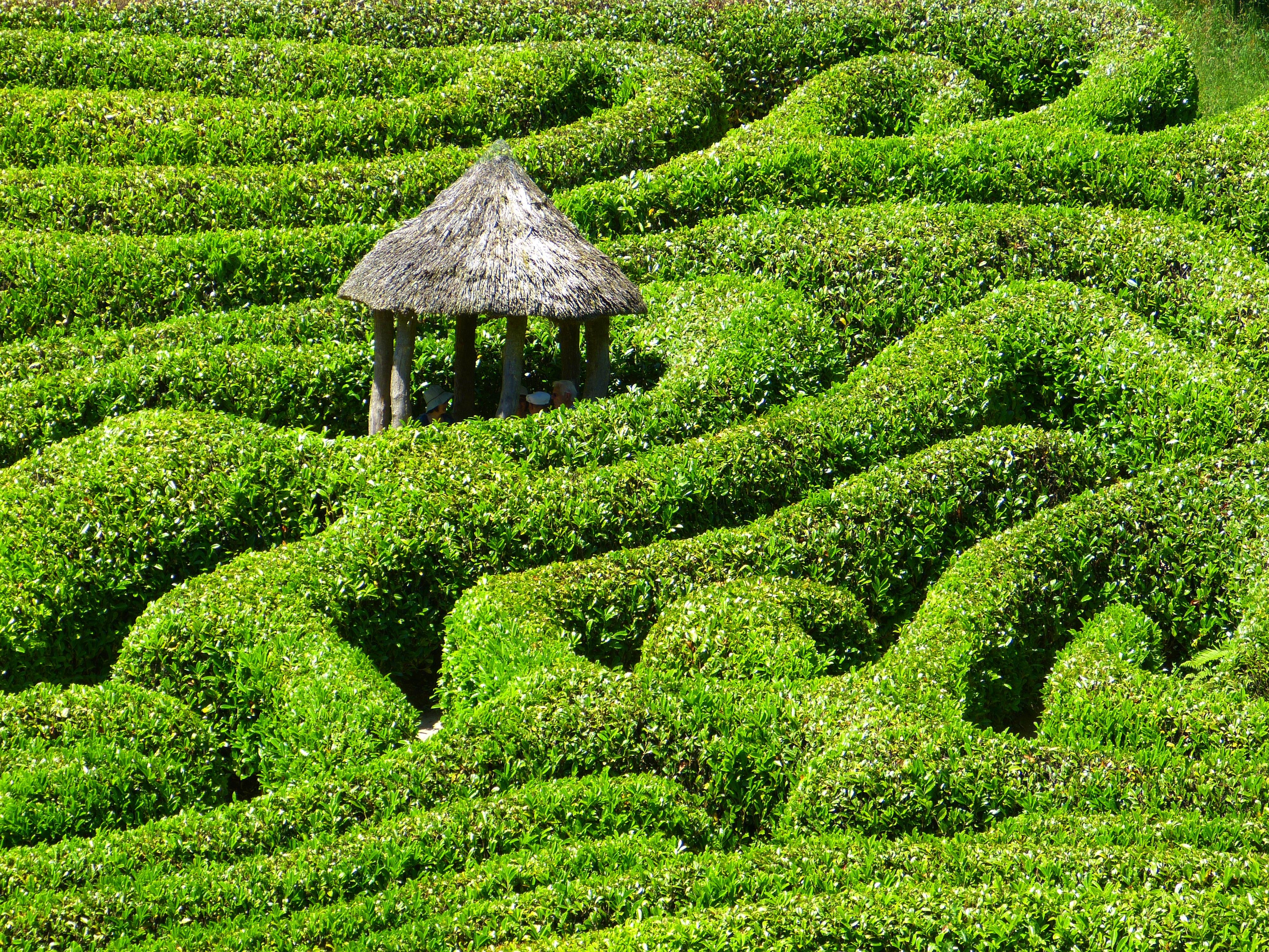 Fotos gratis rbol planta campo c sped flor verde bot nica agricultura jard n Jardin laberinto