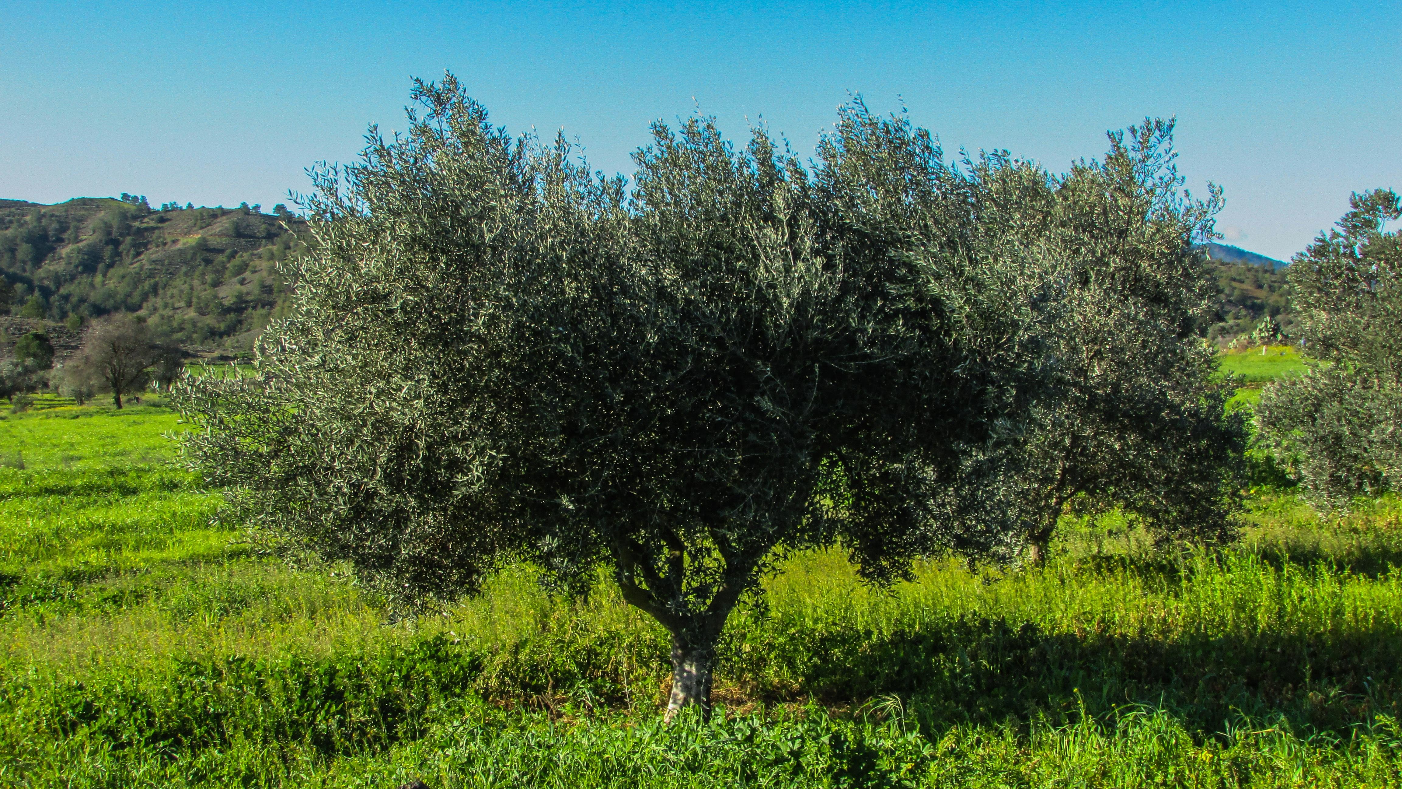 mediterranean woodlands ecosystem Key words: carbon dioxide exchange deciduousness vs evergreenness  ecosystem ecology eddy covariance fluxnet mediterranean oak woodlands .