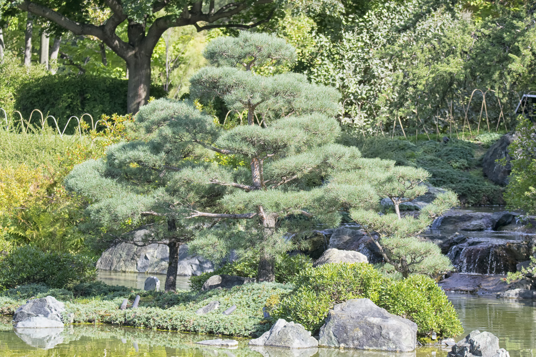 rbol planta flor ciudad estanque botnica jardn flora planta de casa delaware de canad arbusto jardn