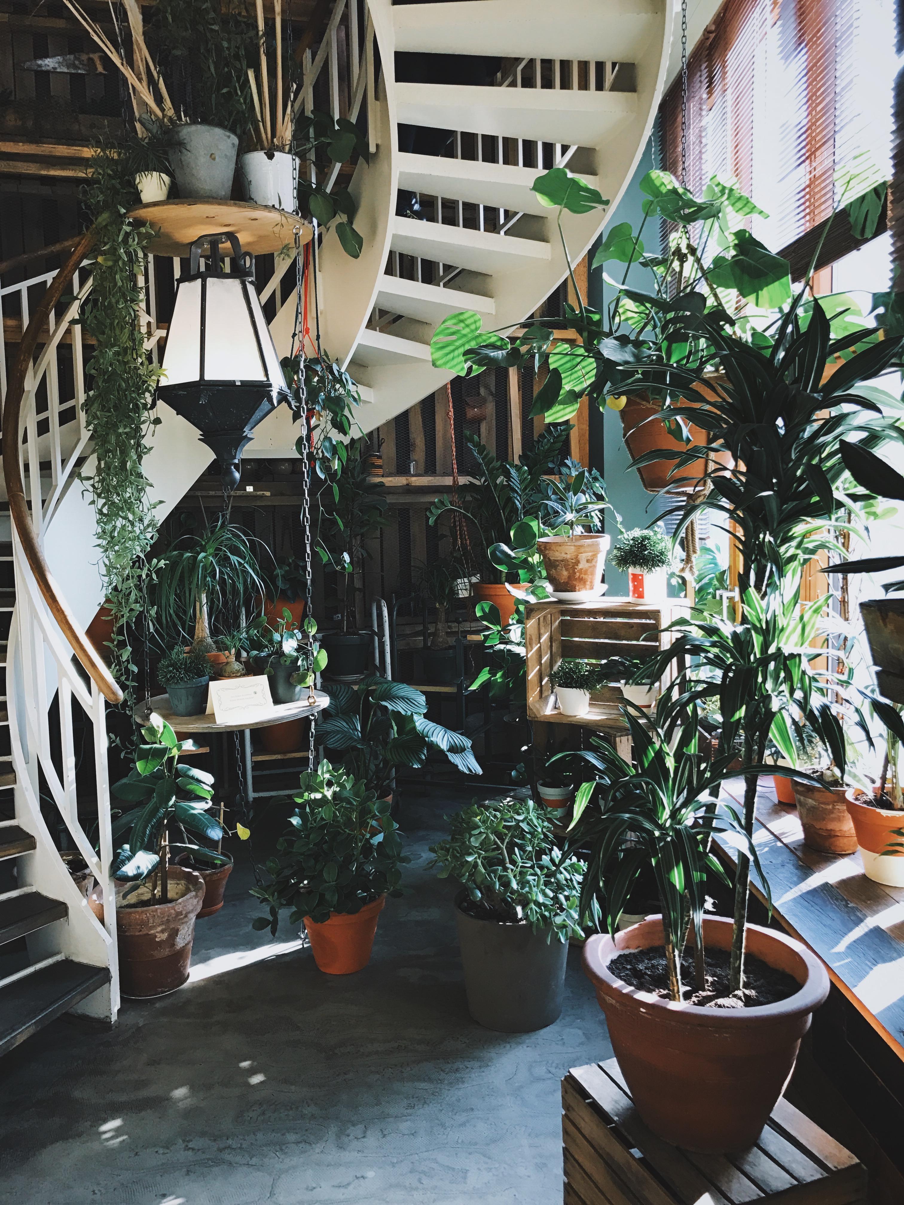 Décoration Marche Escalier Intérieur images gratuites : arbre, plante, fleur, intérieur