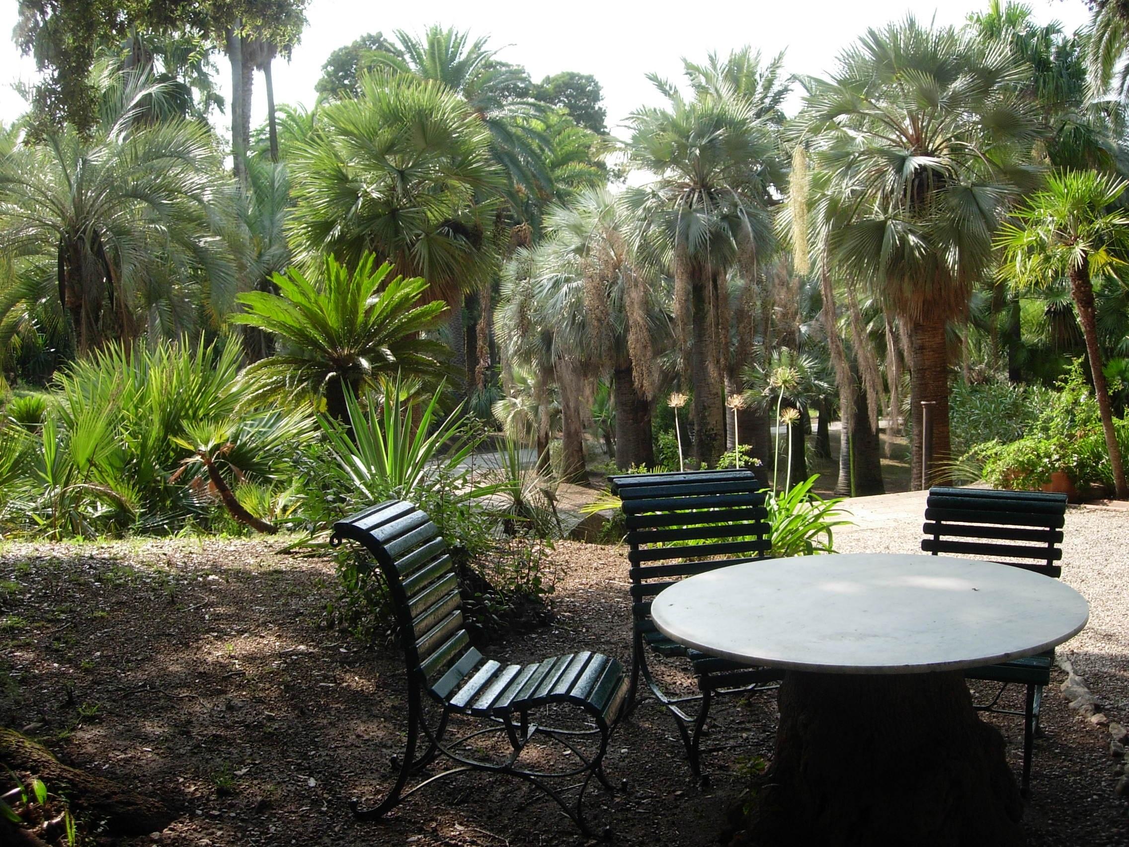 Tree Plant Flower Jungle Backyard Italy Botany Garden Trees Resort  Botanical Garden Estate Yard Palm Trees