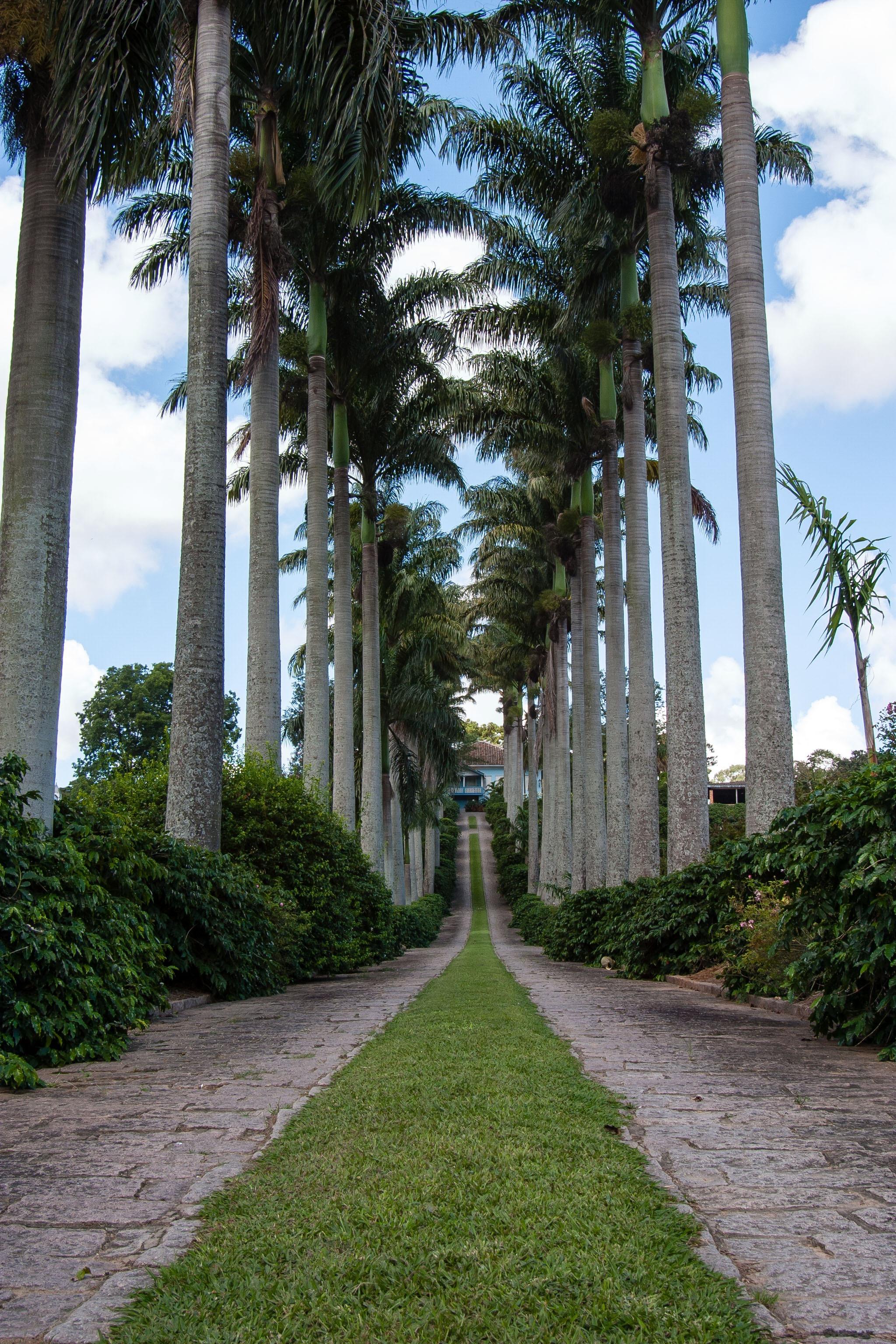 rboles hojas al aire libre frondoso jardinera jardines jardn botnico inmuebles palmas parques perennes caminos pasarelas planta leosa
