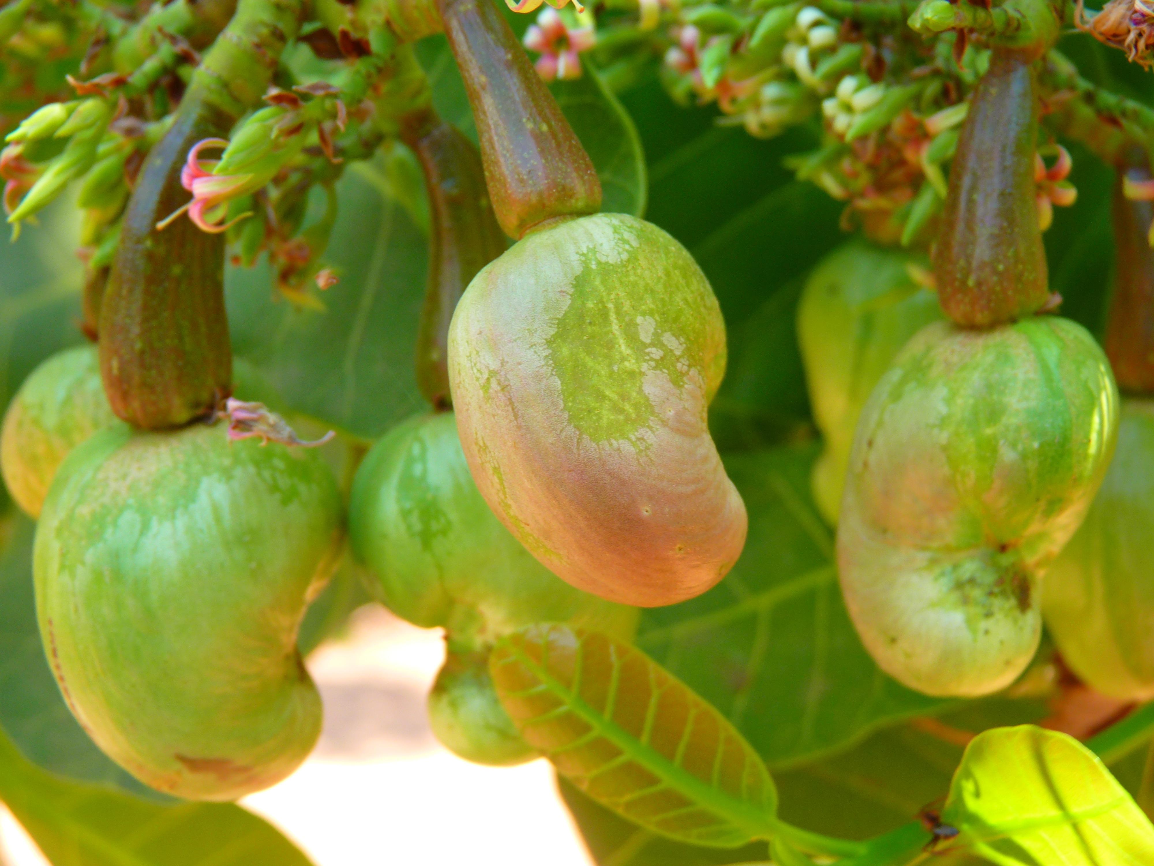 Images Gratuites Arbre Fruit Baie Fleur Aliments Produire