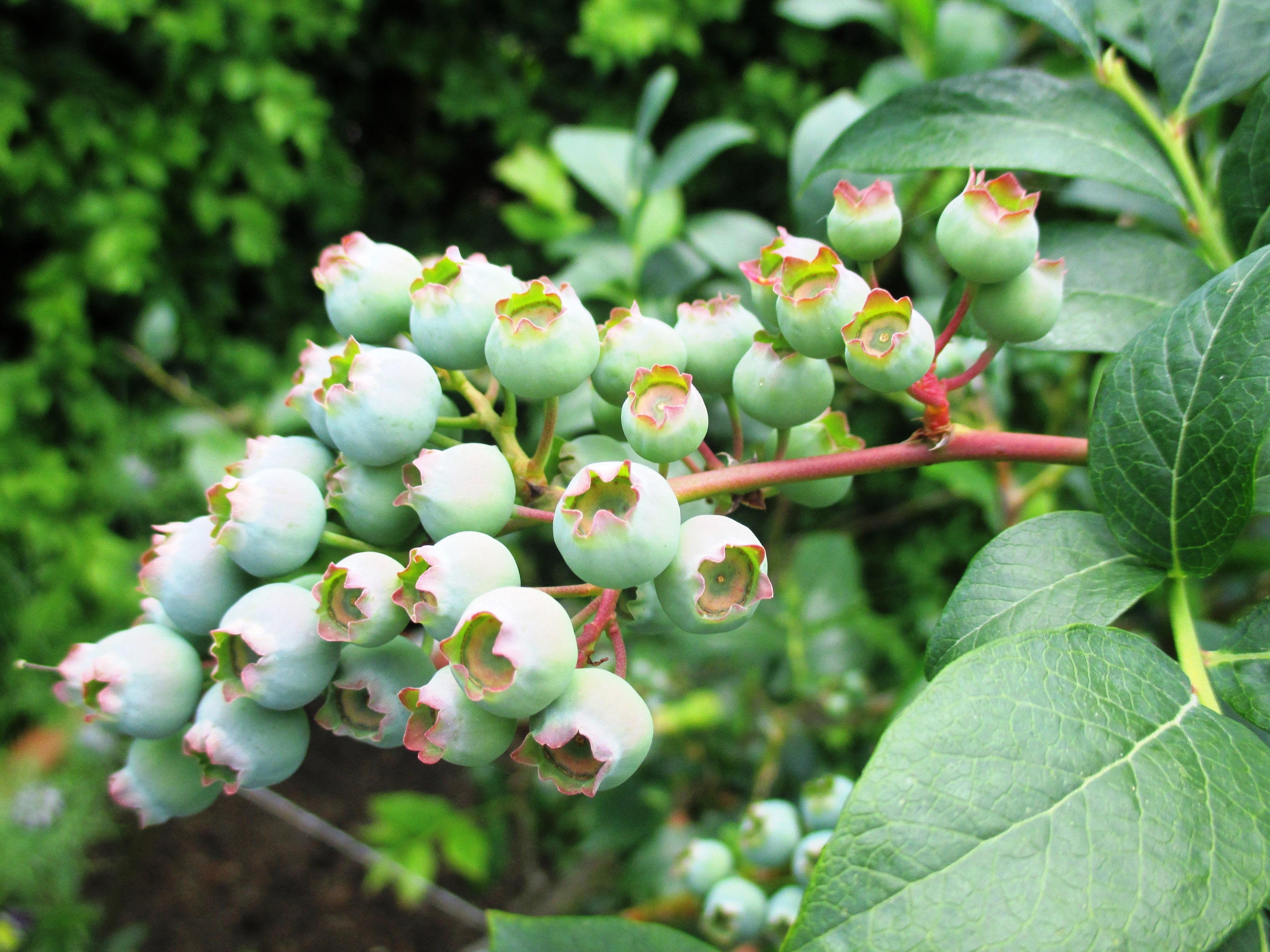 Редкие растения мира фото и названия входит