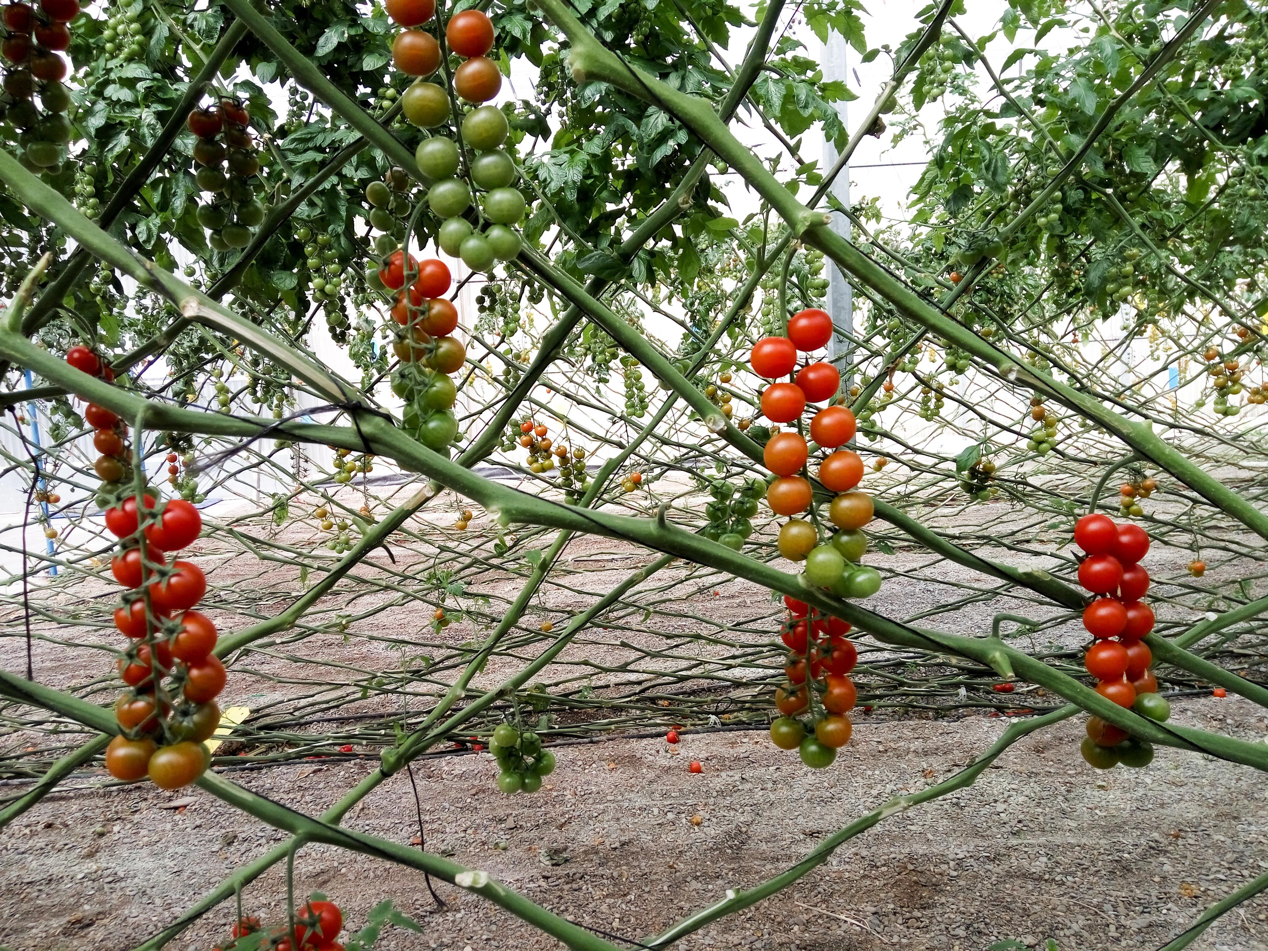 Images gratuites arbre fruit fleur au volant bouquet aliments produire feuilles - Fir tree planting instructions a vigorous garden ...