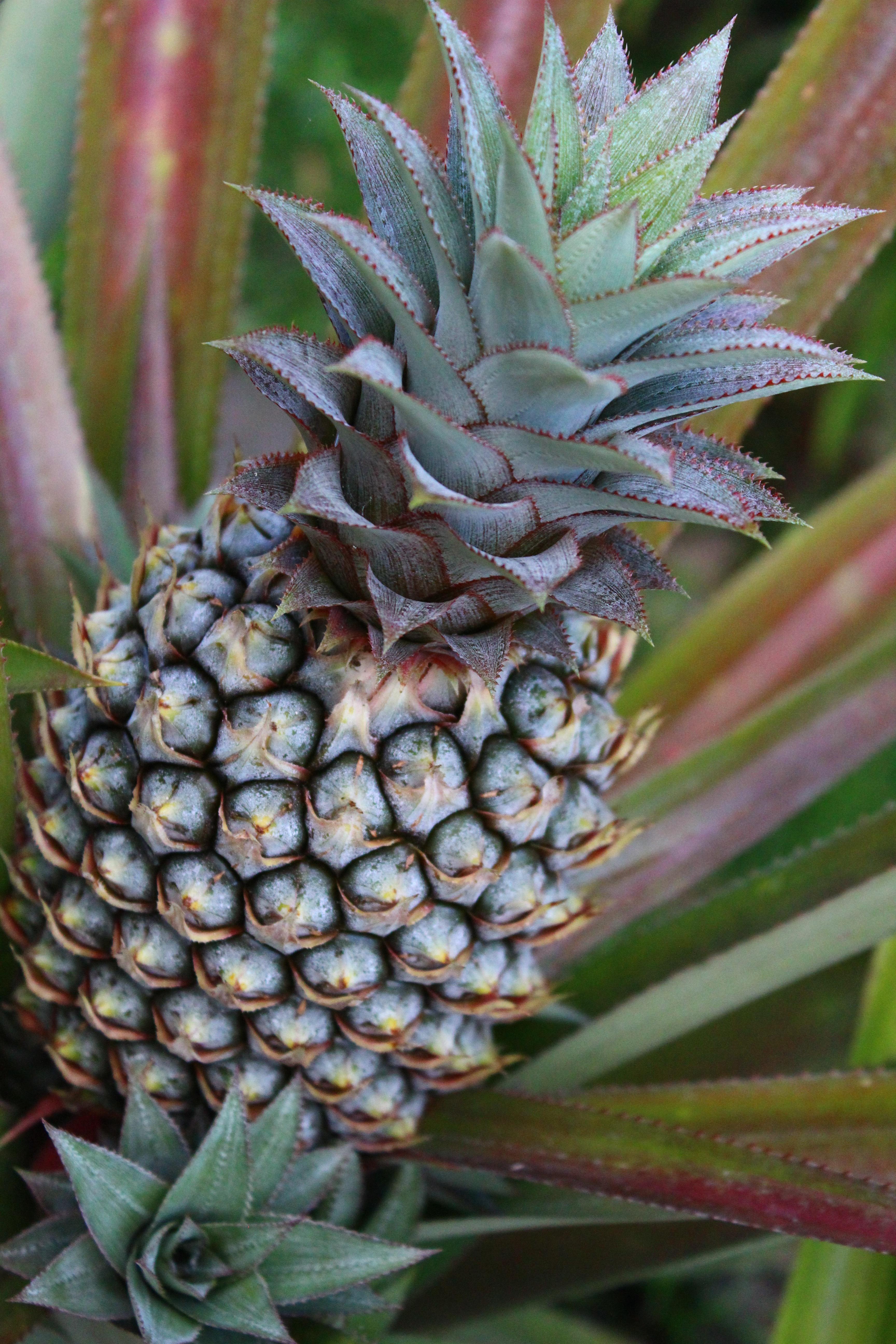 Free Images Tree Fruit Flower Food Produce Botany