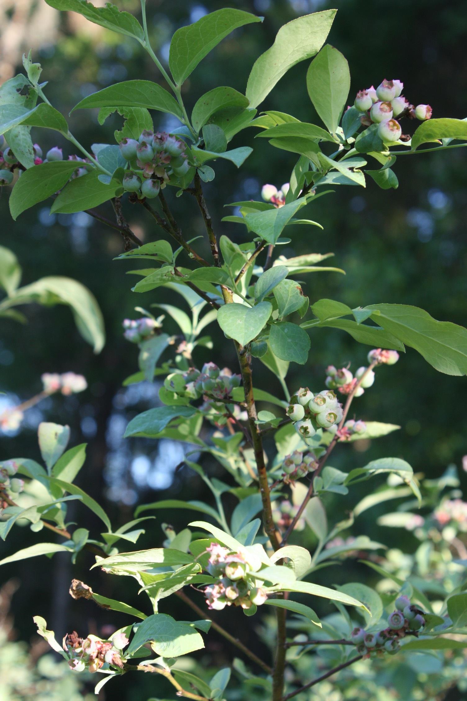 Kostenlose foto Baum Frucht Blume Lebensmittel produzieren