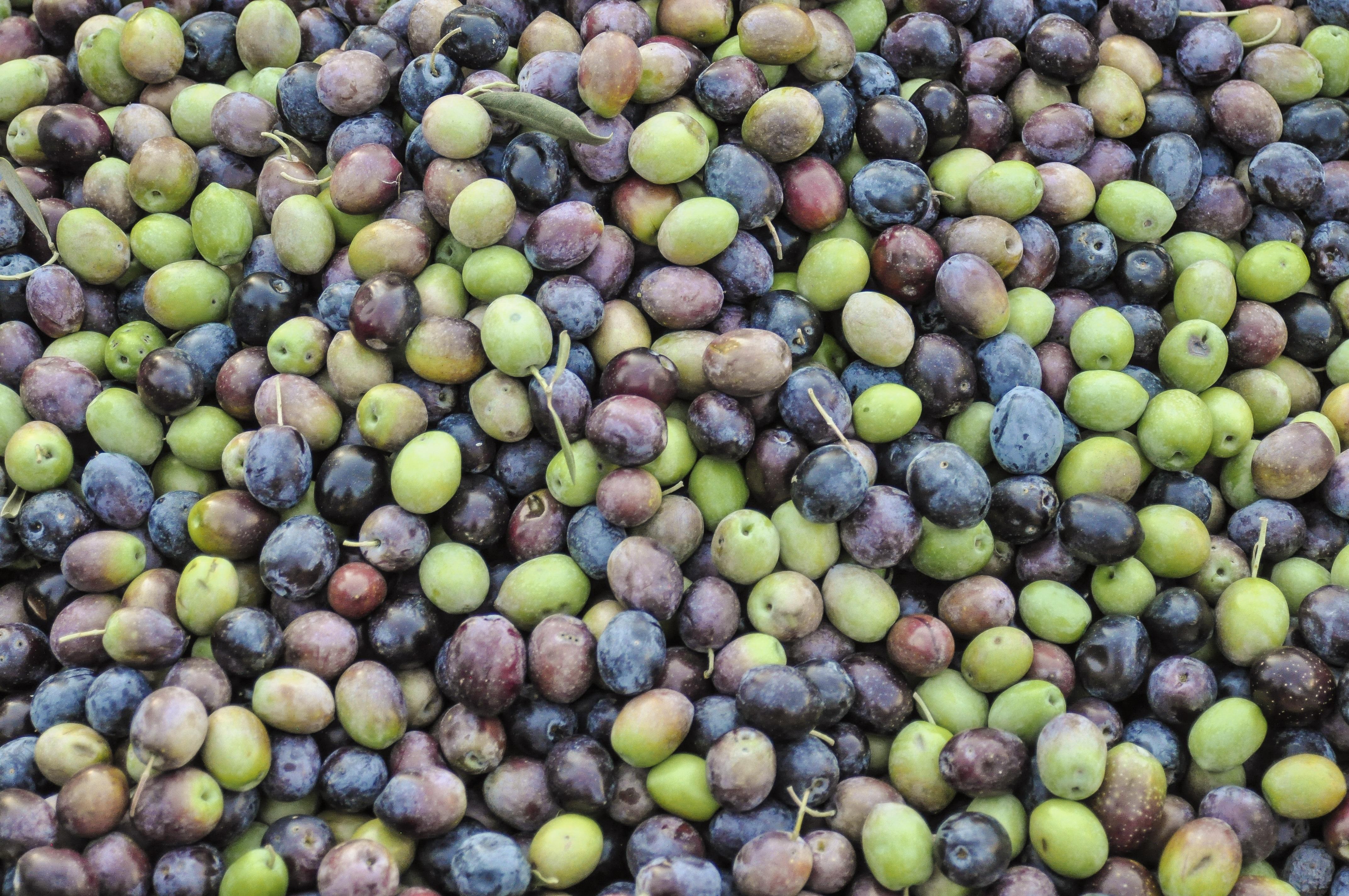 Lieblings Kostenlose foto : Baum, Frucht, Lebensmittel, produzieren, Ernte &NF_57