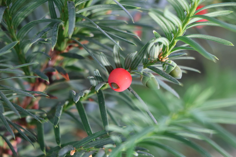 Kostenlose foto Baum Frucht Blatt Blume Busch produzieren