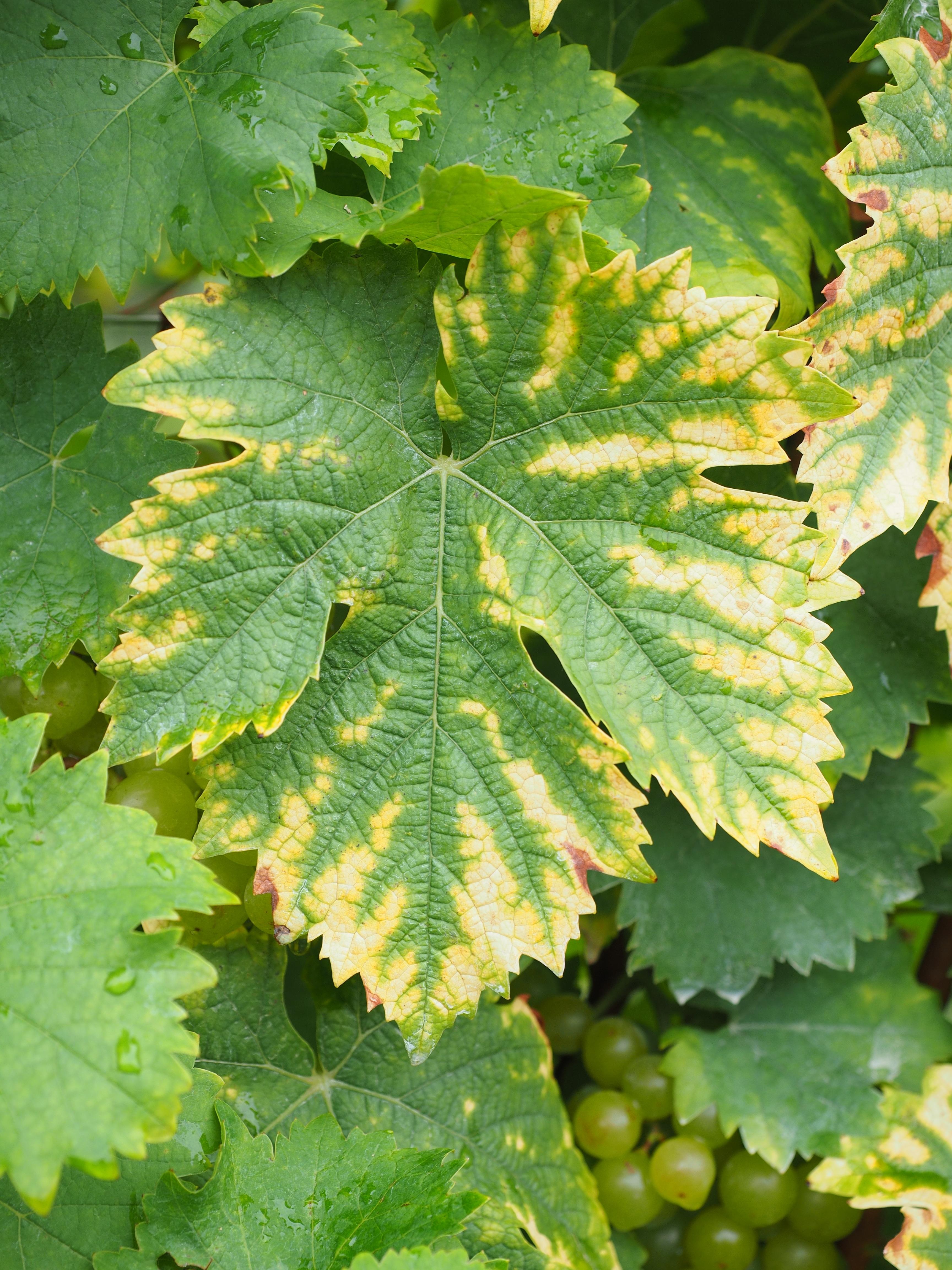 Gambar Menanam Buah Bunga Makanan Hijau Menghasilkan Musim