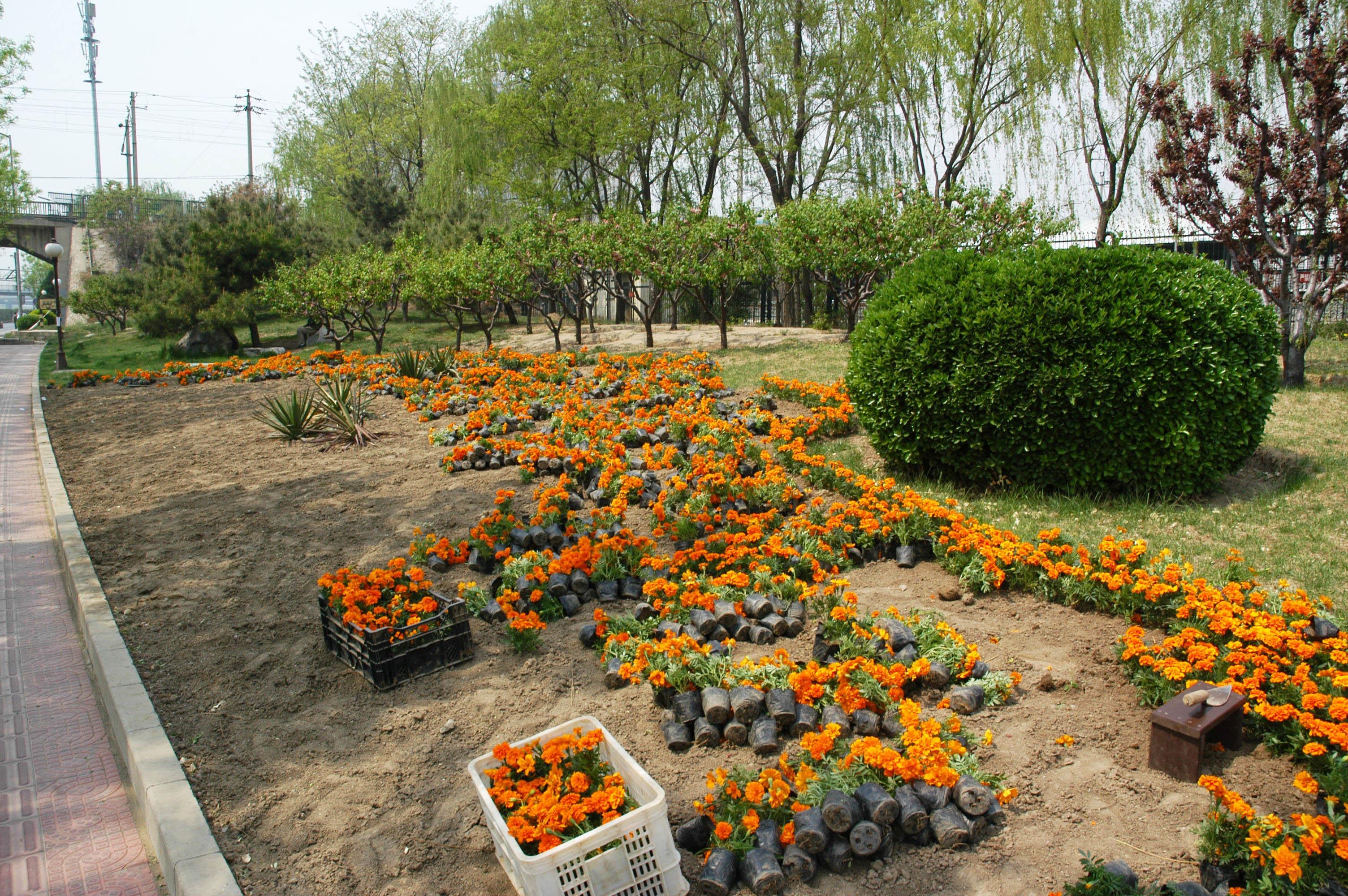Images gratuites arbre plante pelouse arri re cour for Amenagement parterre de fleur