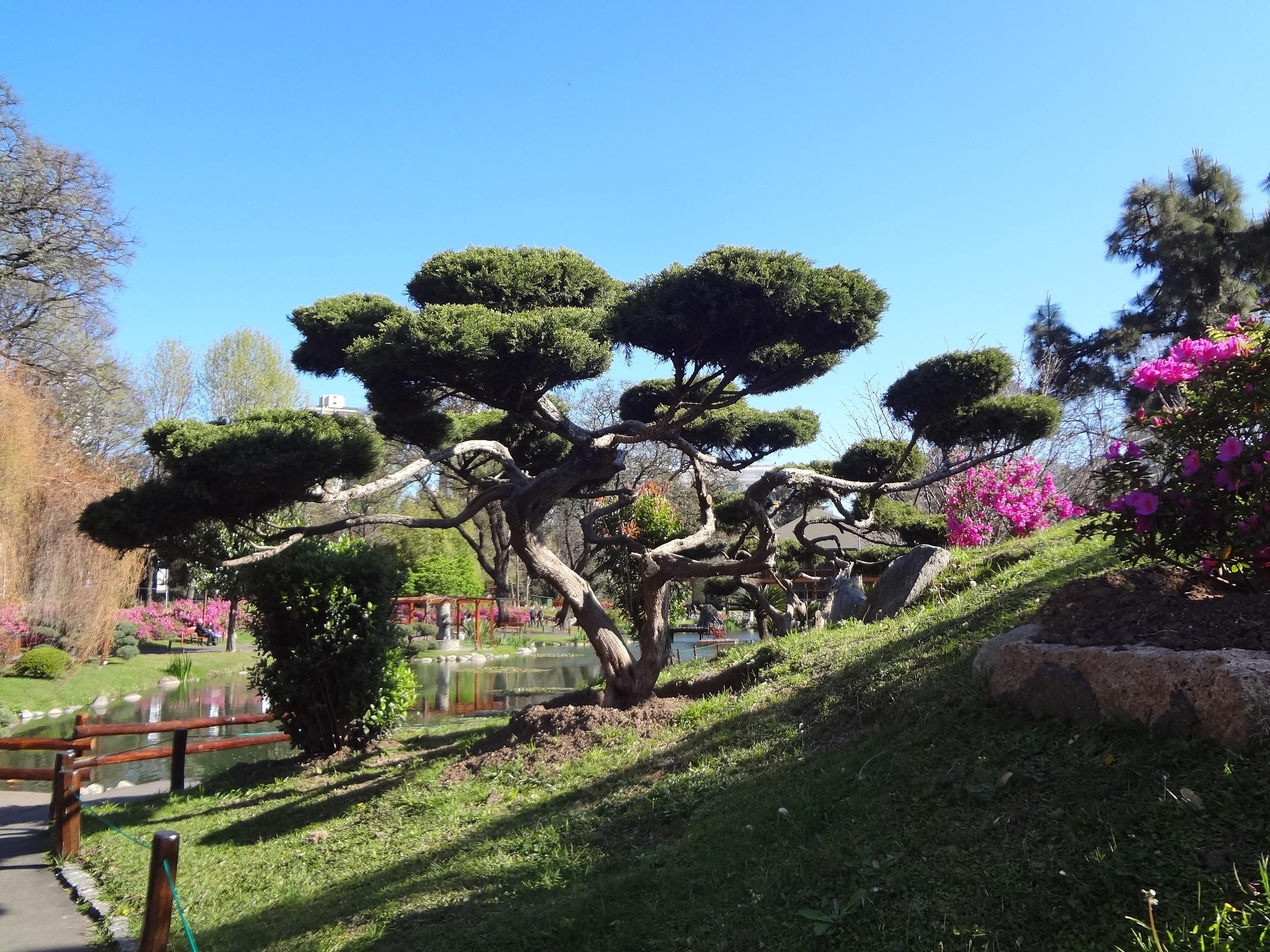 Fotos gratis rbol planta c sped flor bot nica flora jard n japon s arbusto jard n - Cesped japones fotos ...