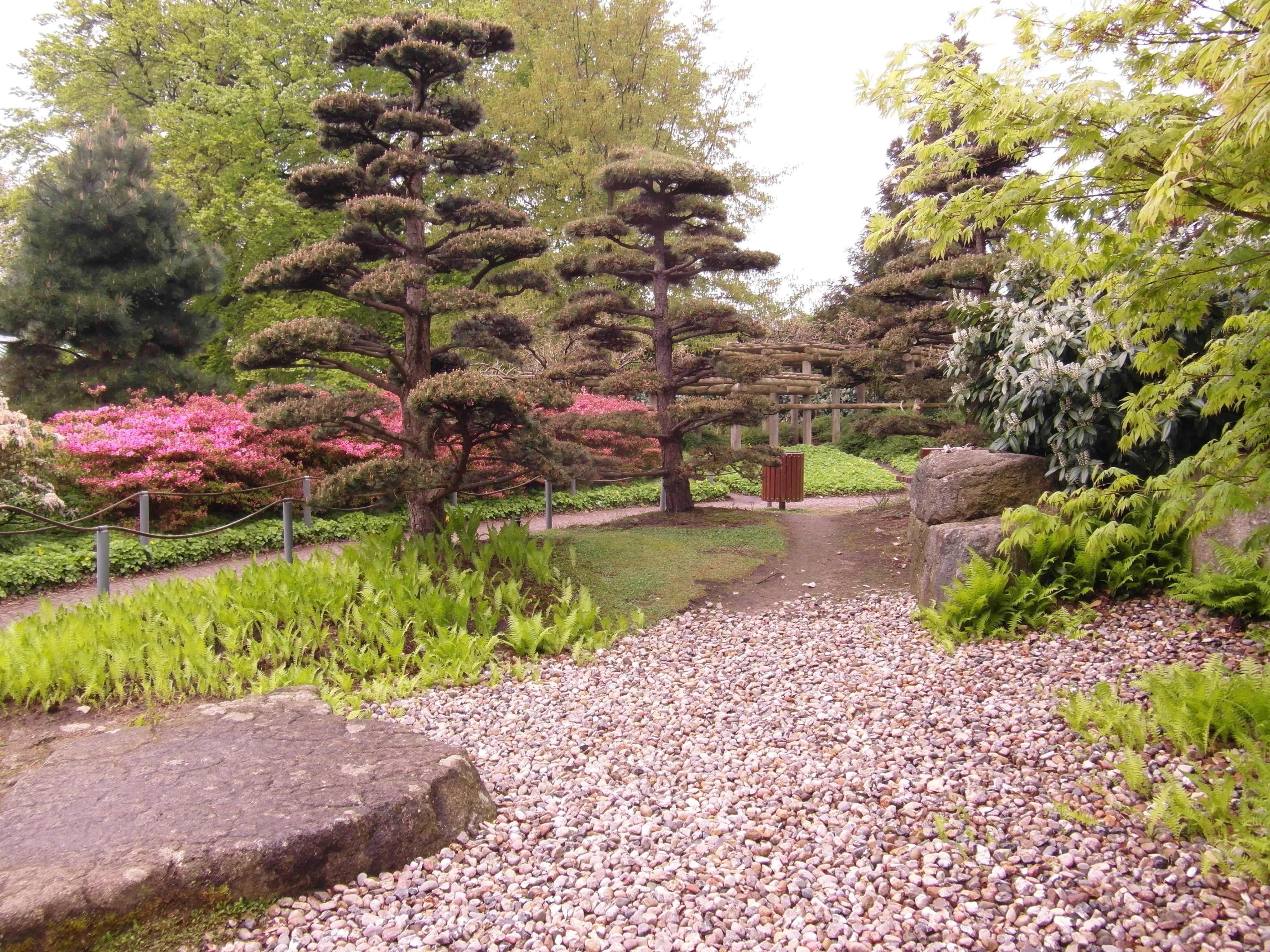 Japanese Garden Landscaping Free Images Tree Lawn Flower Park Botany Japanese Garden
