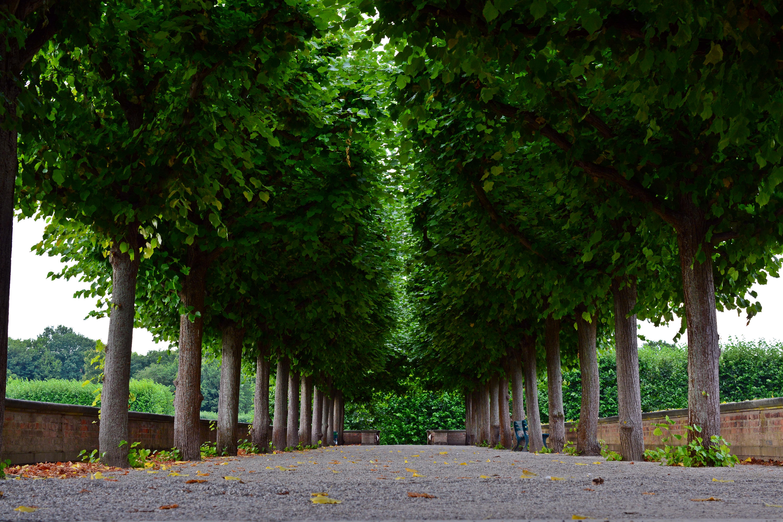 fotos gratis rbol csped hoja flor verde otoo parque botnica jardn rboles avenida arbusto sombreado caduco plantacin bosque
