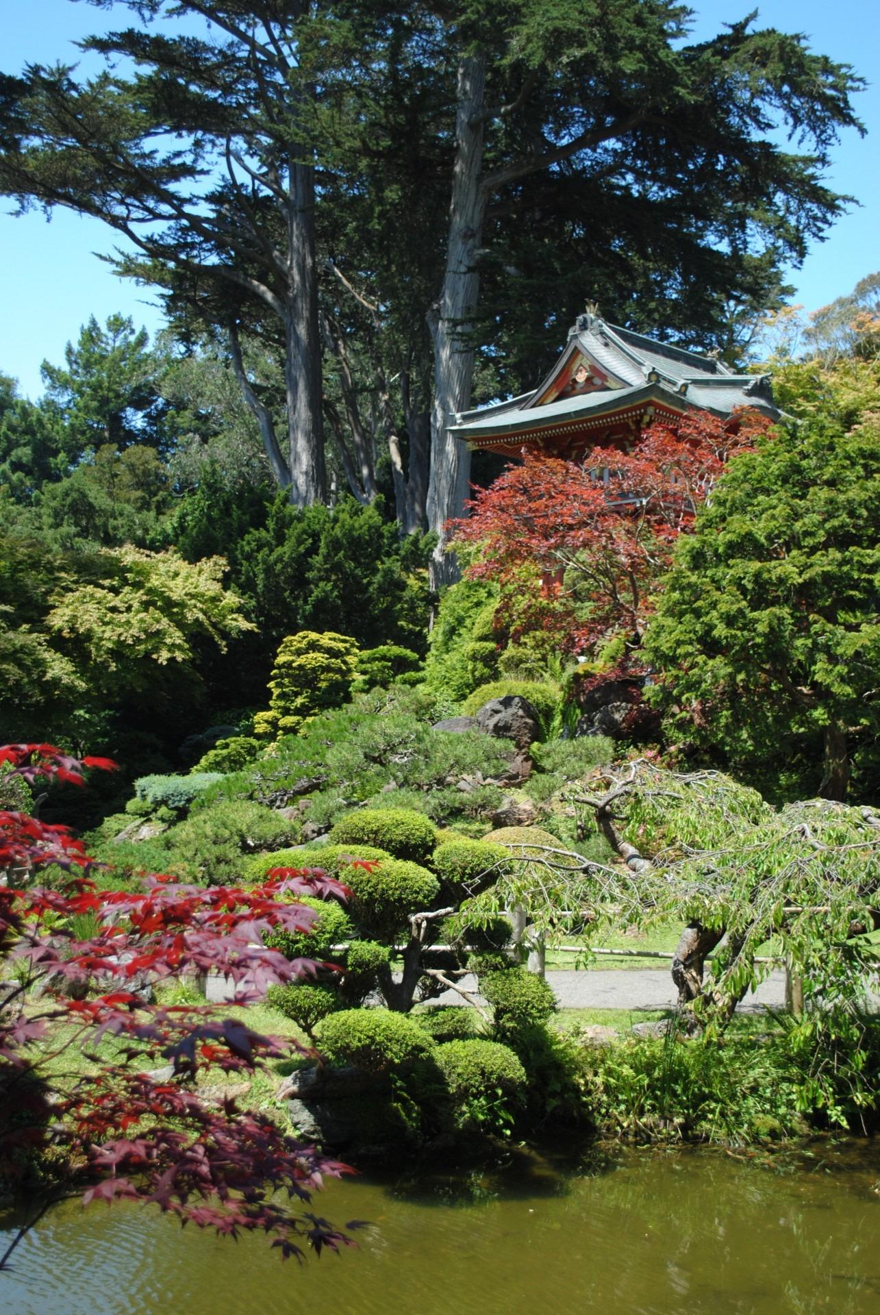 Images Gratuites : arbre, plante, pelouse, feuille, fleur, San ...