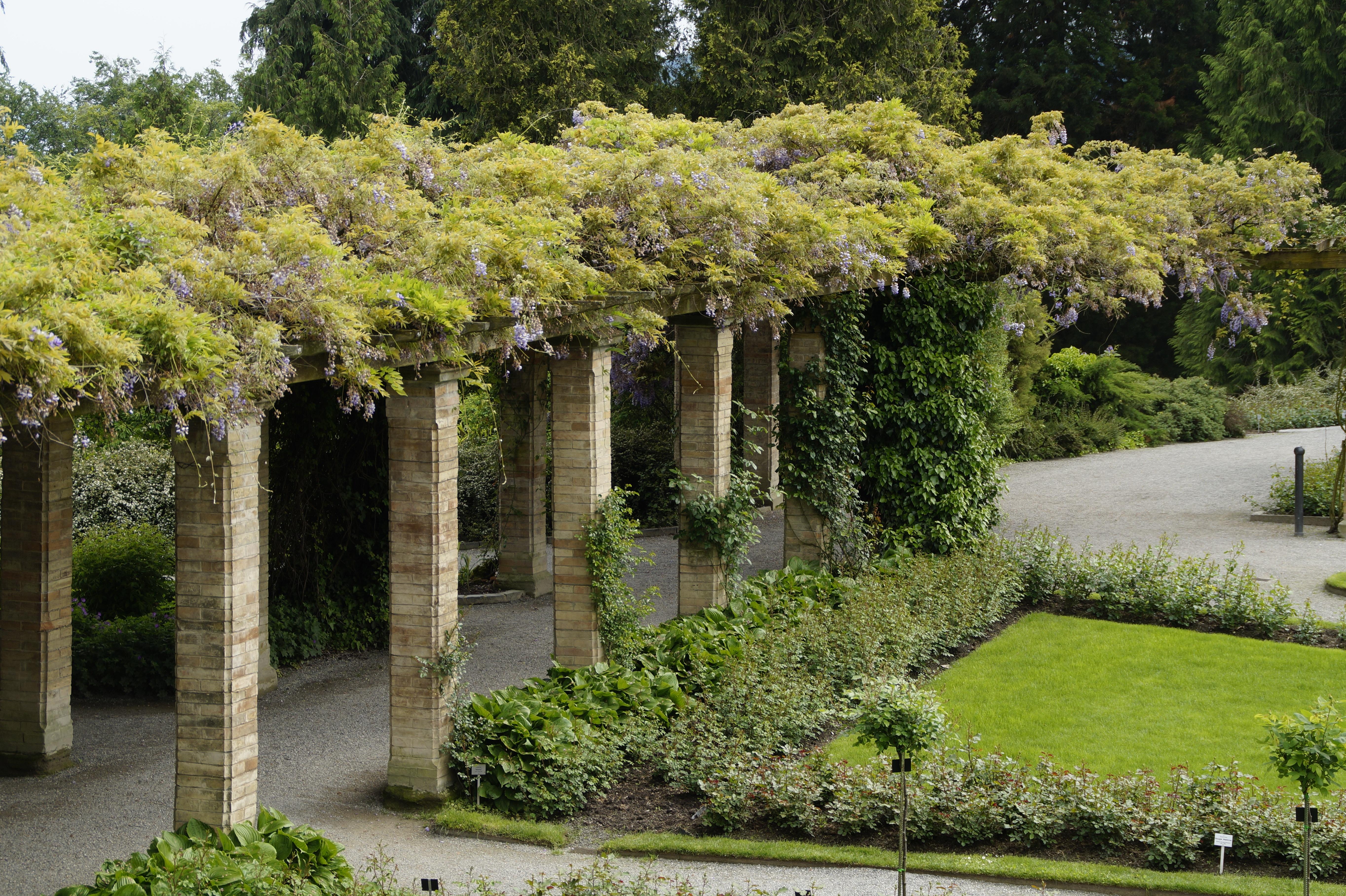 Superbe Arbre Plante Pelouse Manoir Fleur Arrière Cour Propriété Botanique Jardin  Aménagement Paysager Cour Arbuste Changement