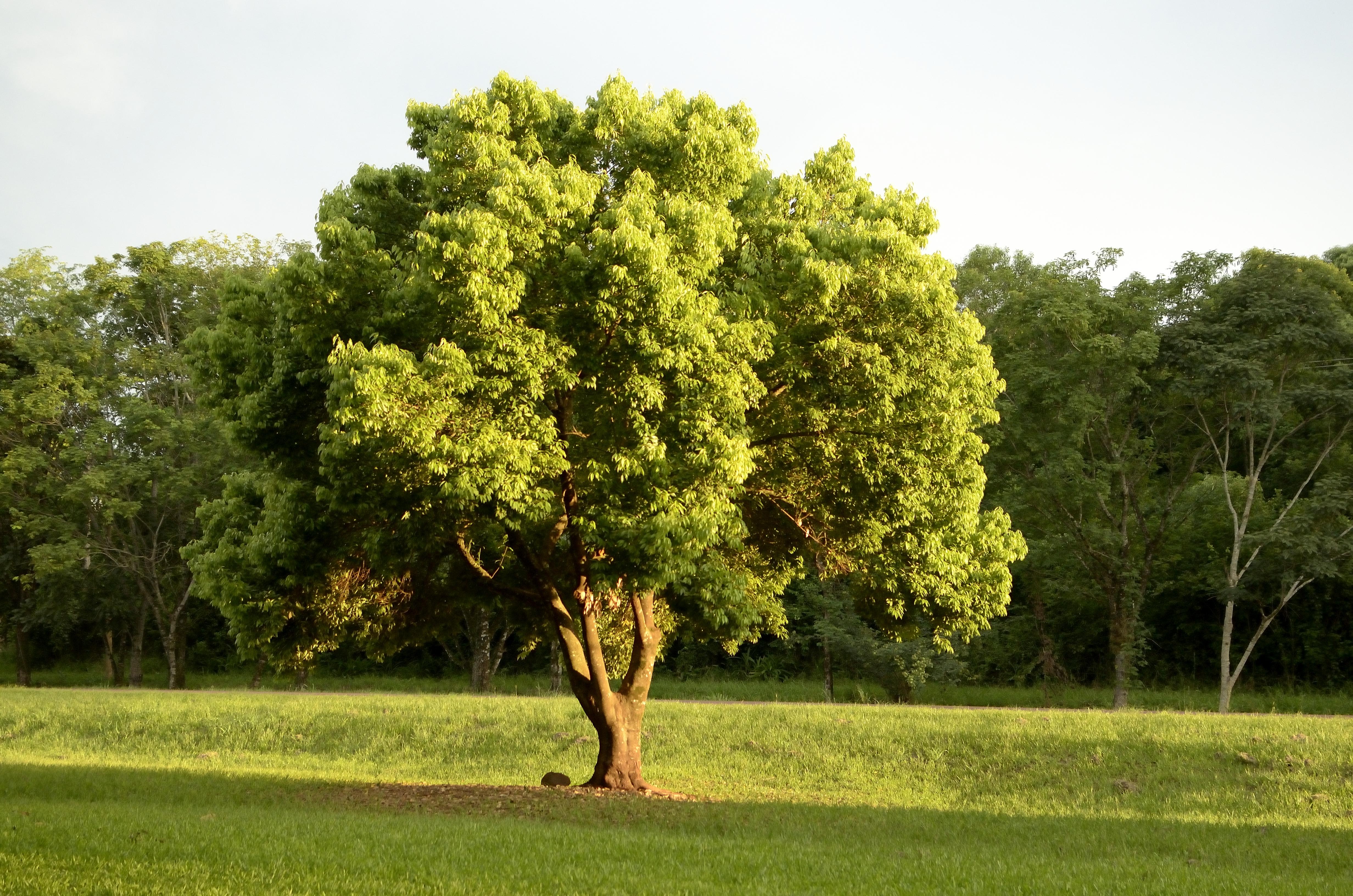 поработать железной растения деревья фото нить обязана быть