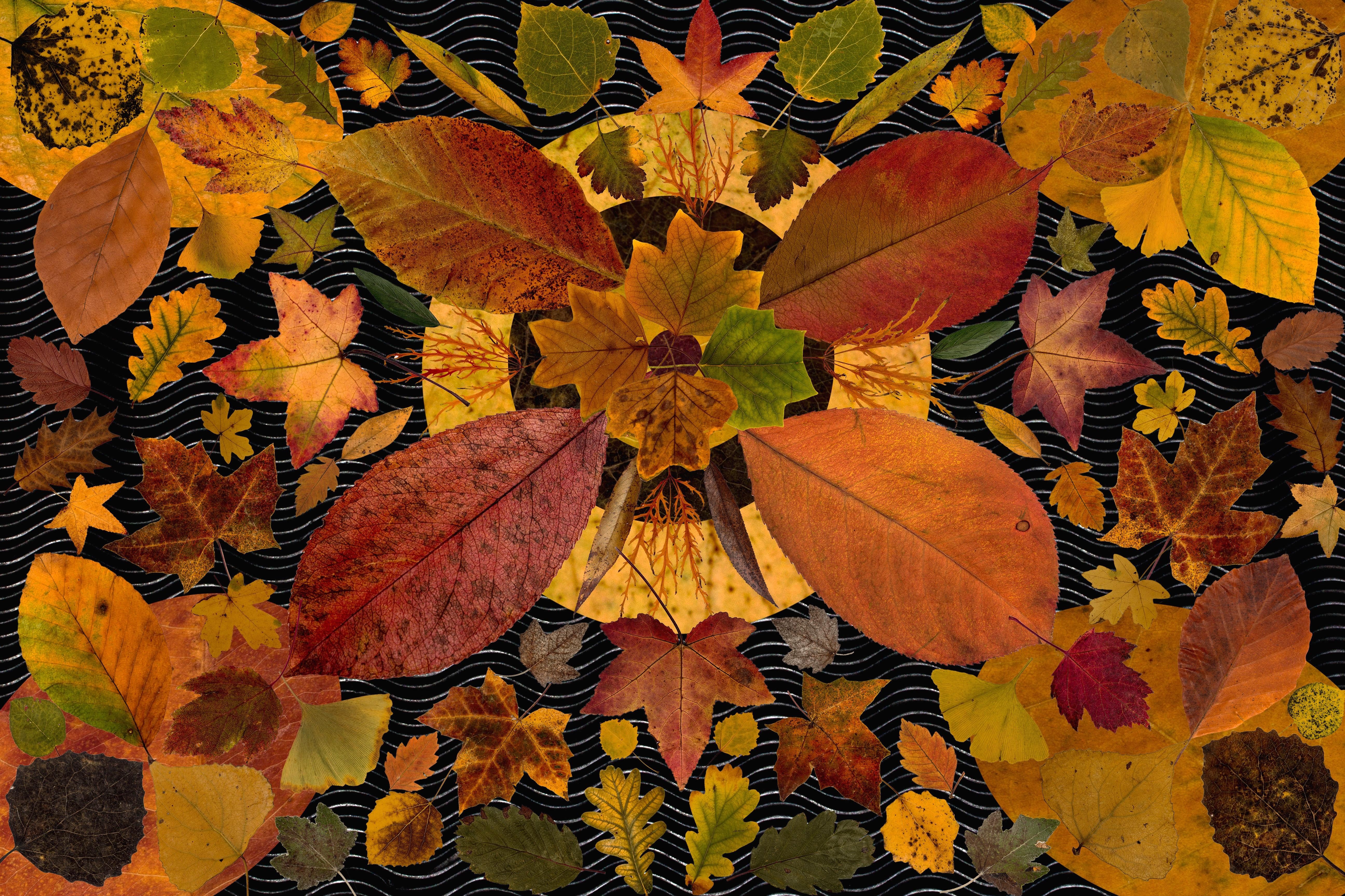 Fotos gratis : árbol, planta, árido, flor, seco, patrón, color ...