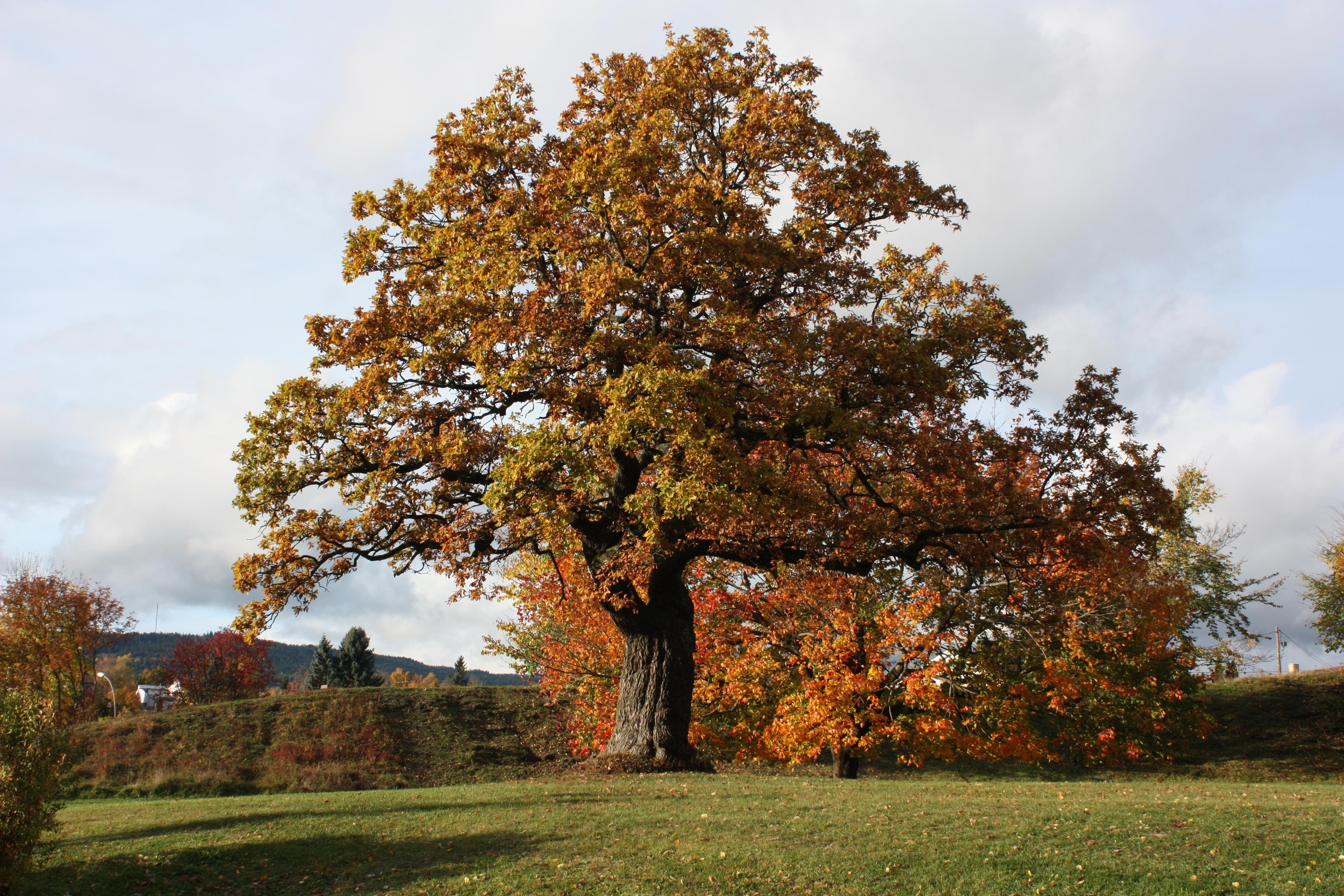 Скандинавская резьба по дереву картинки зенит