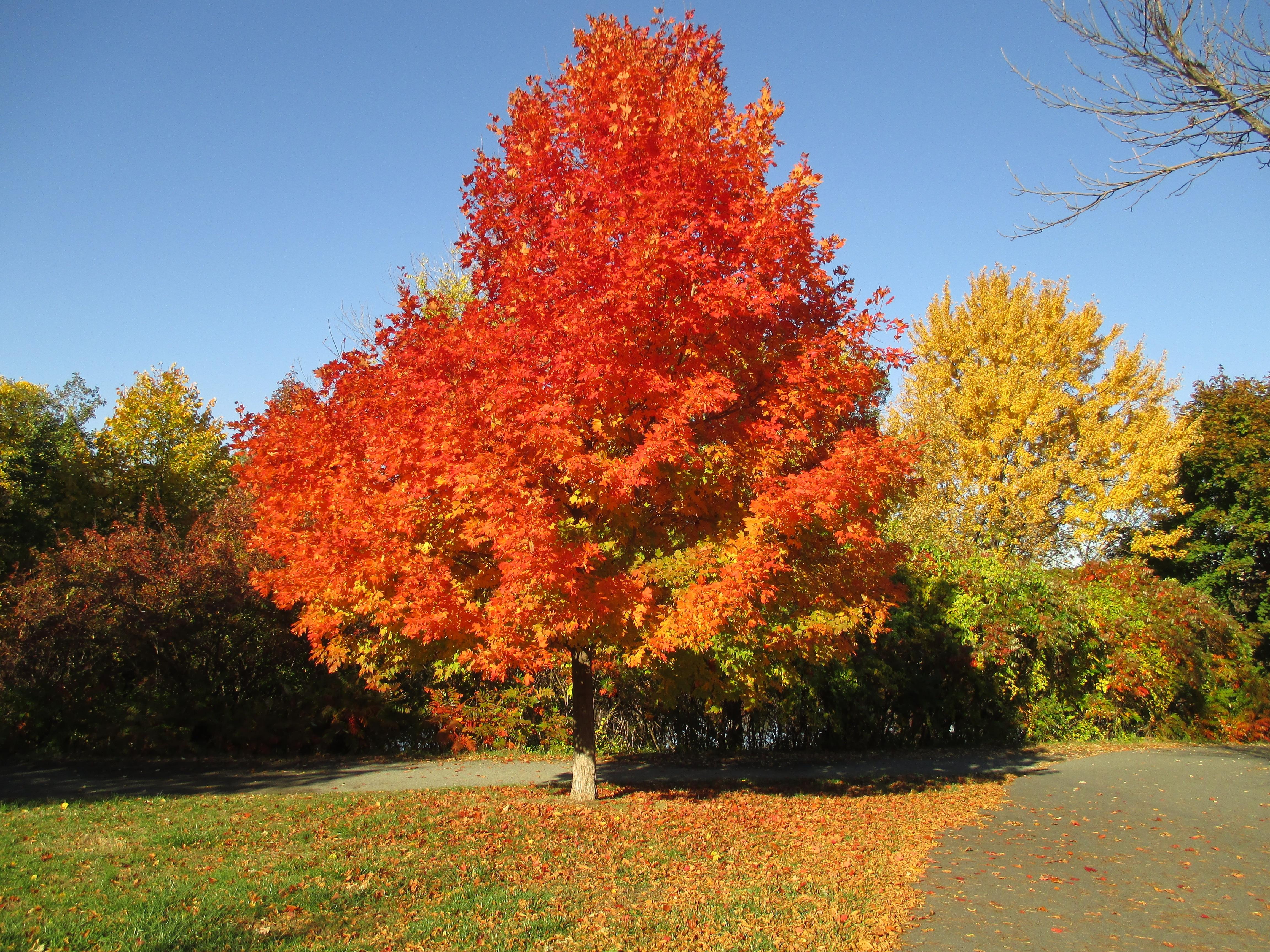 группа осенние листья и деревья фото интерьере