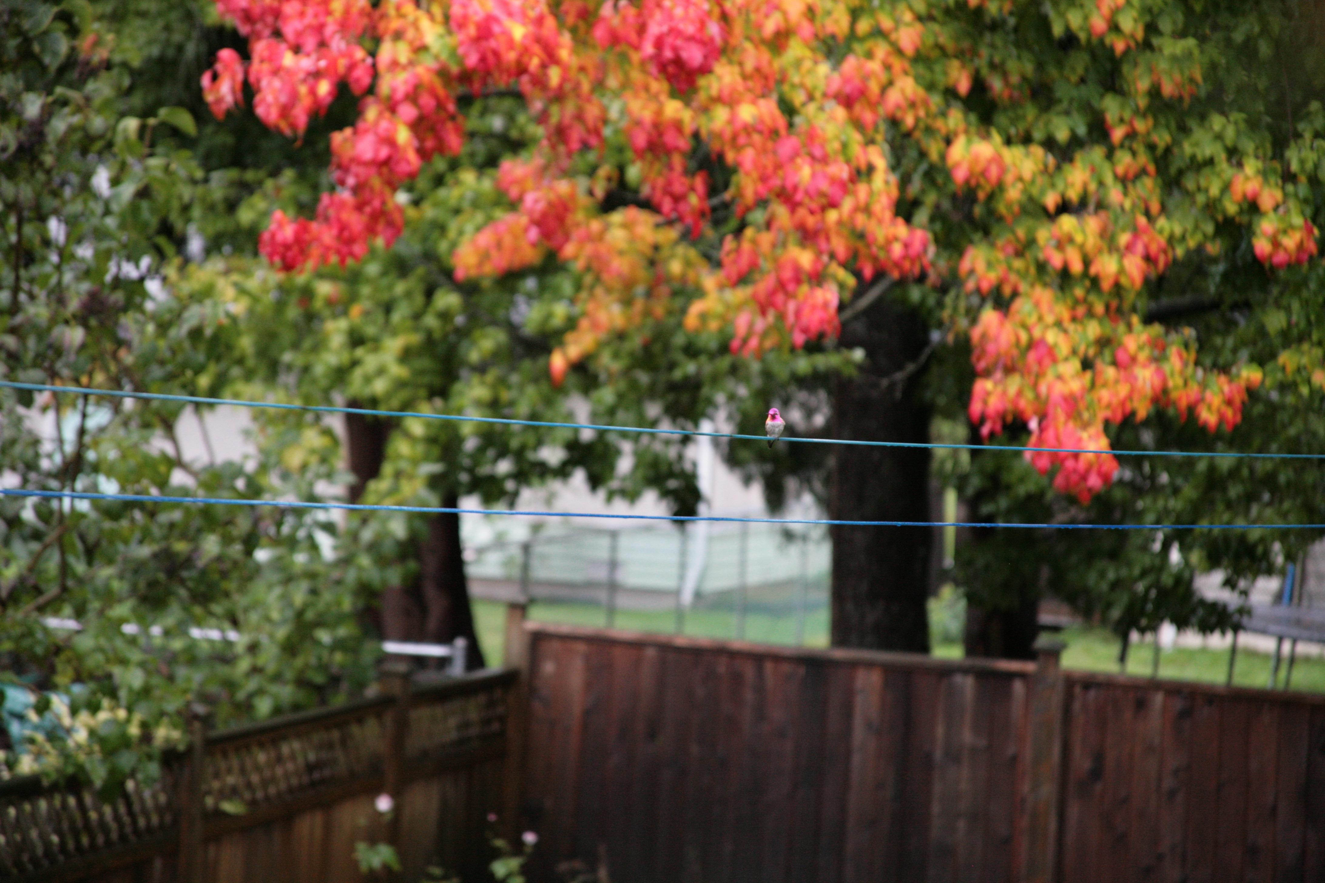 Free images tree leaf fall flower orange green red free images tree leaf fall flower orange green red colourful autumn backyard hummingbird botany yellow garden pink season clothesline mightylinksfo