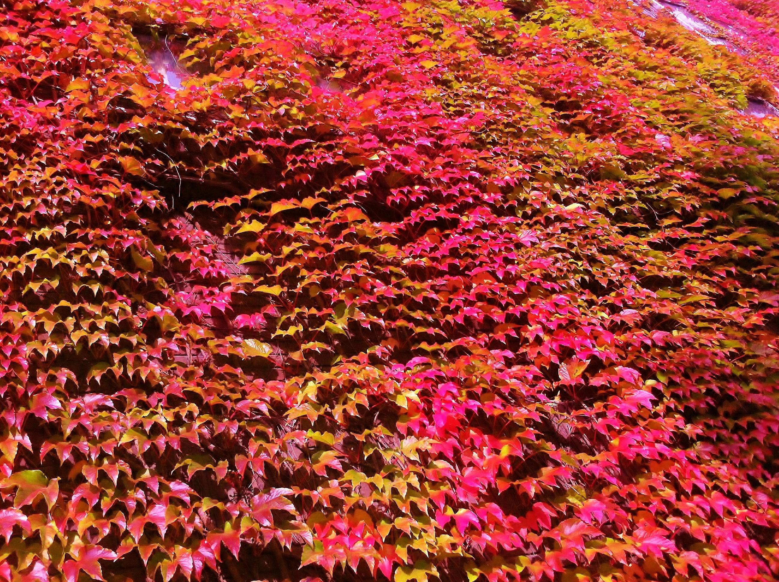 Fotos gratis hoja flor bot nica flora temporada - Rododendro arbol ...