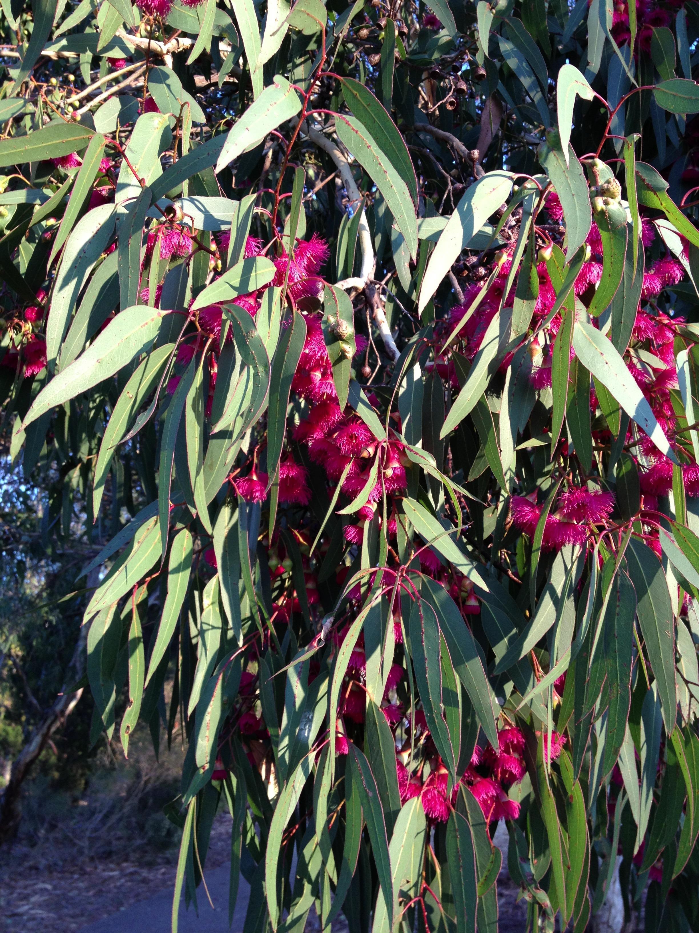 images gratuites arbre feuille fleur floraison