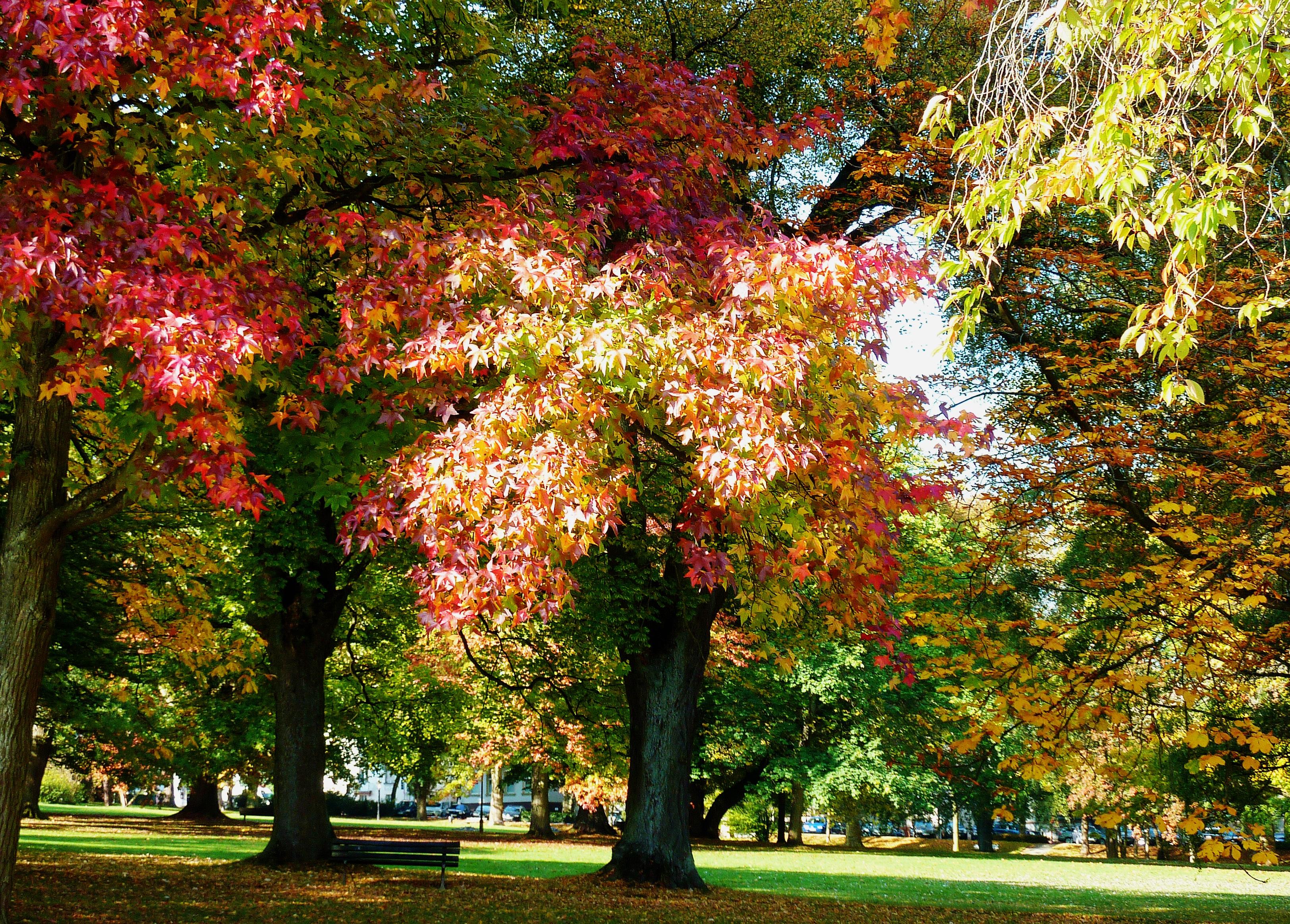 Fotoğraf Ağaç Yaprak çiçek Kuru Kırmızı Park Botanik Renkli