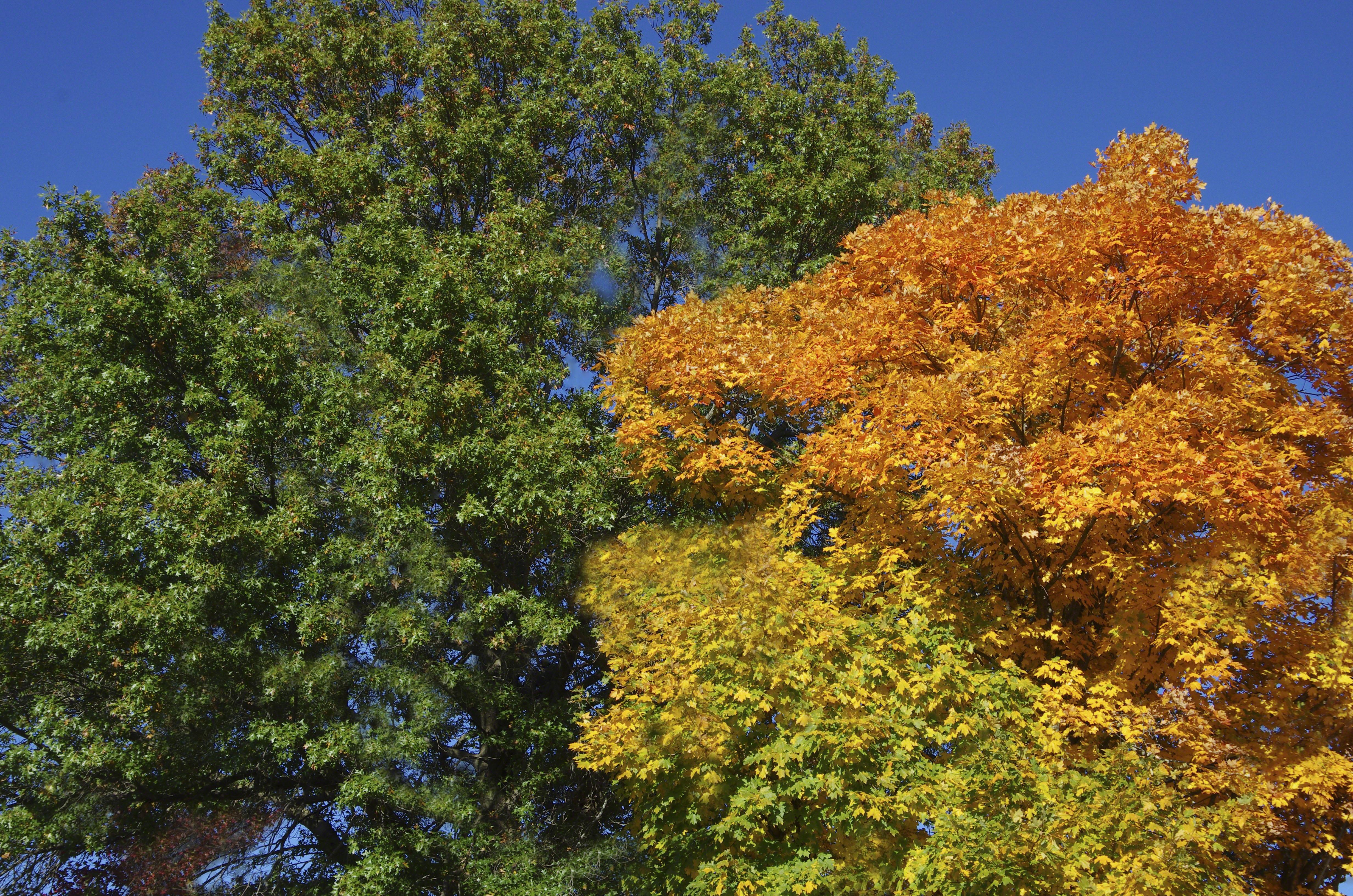 Fotos gratis rbol flor hojas perennes temporada for Plantas de hojas perennes para jardin