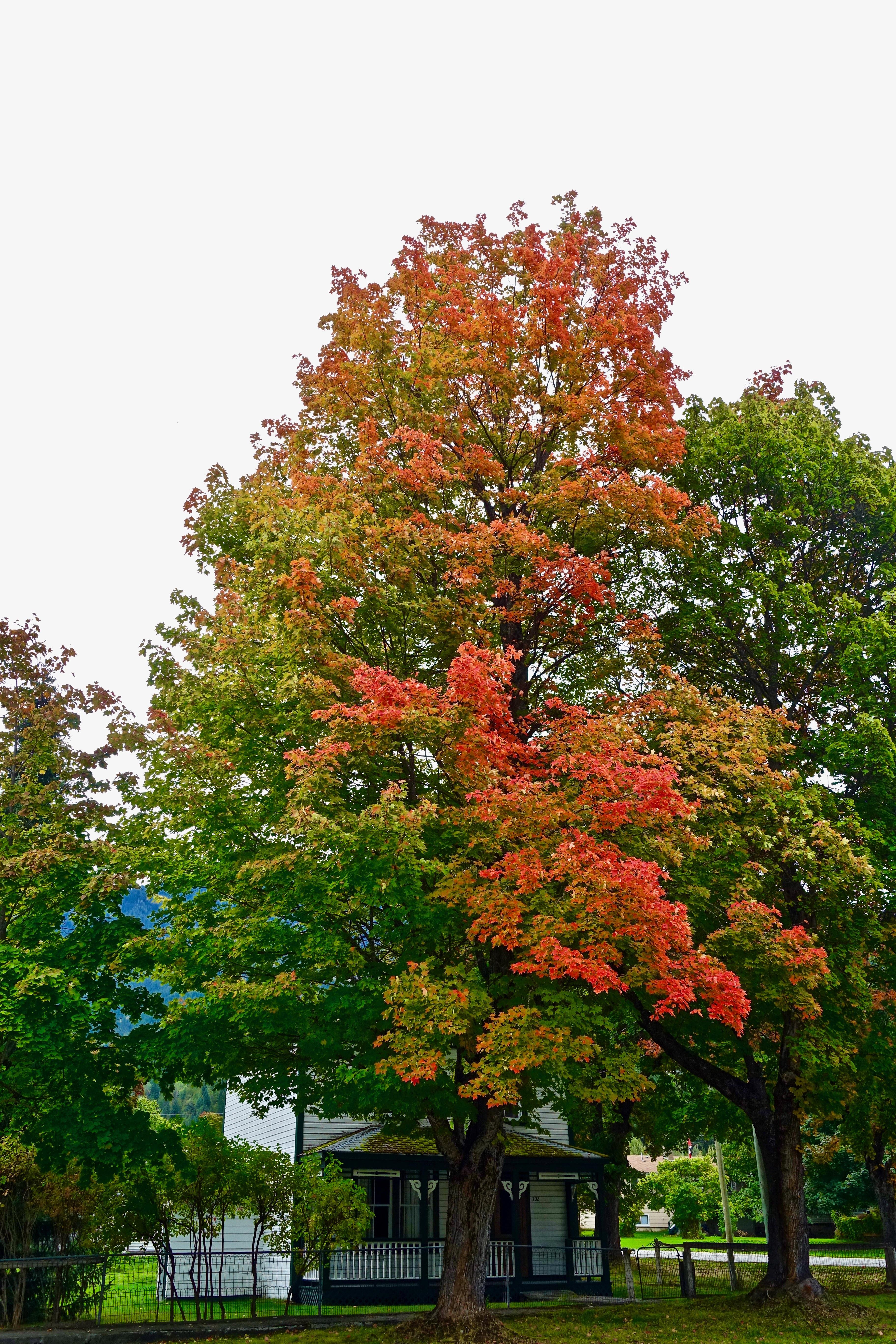 Free Images : leaf, flower, foliage, red, natural, autumn, botany ...