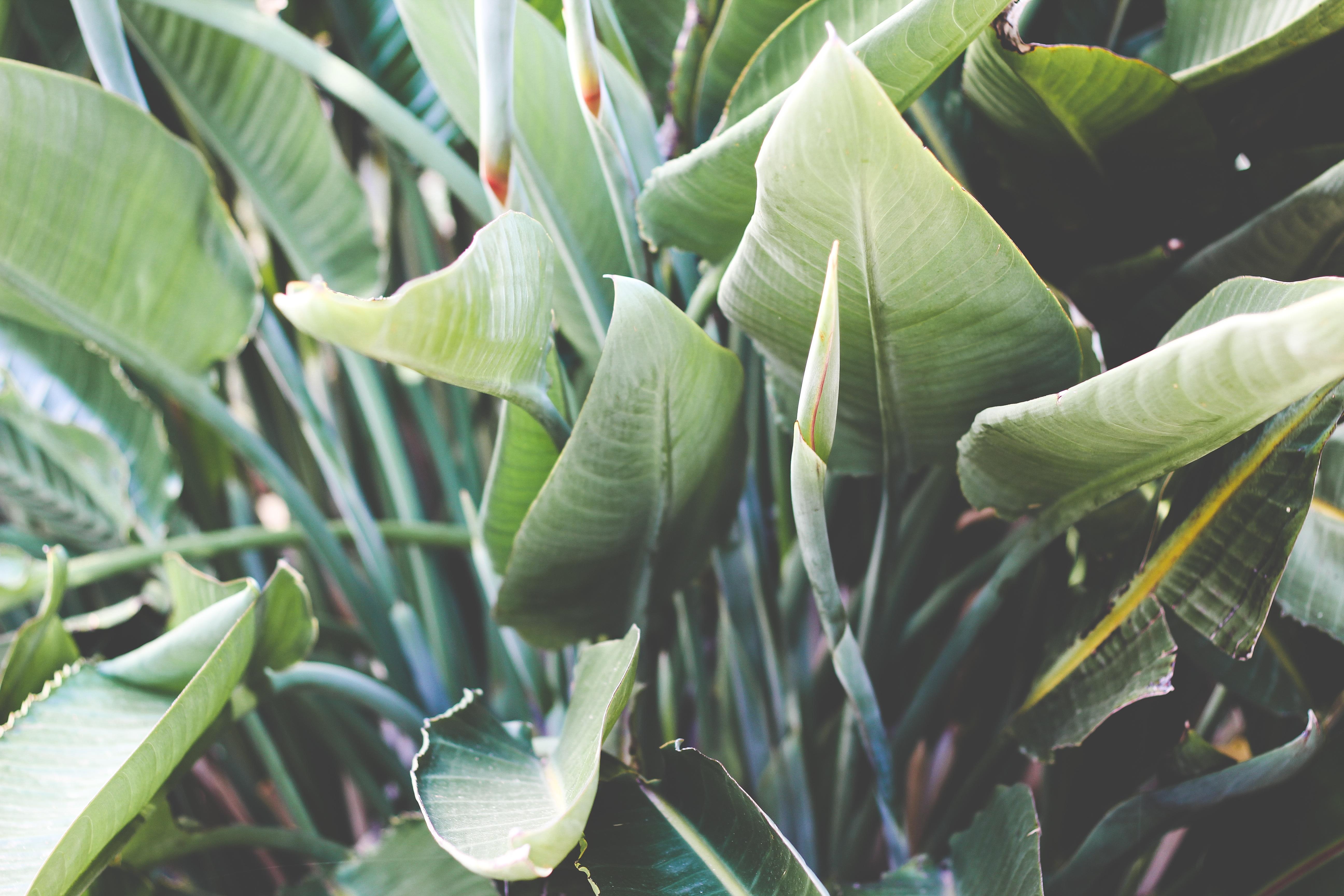 images gratuites : arbre, feuille, fleur, aliments, vert, produire