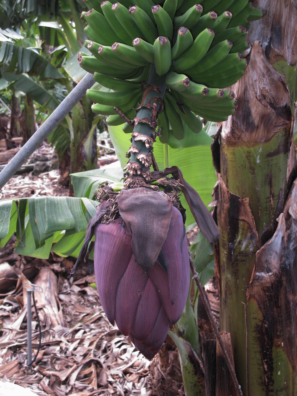 Gratis billeder tr blad mad jungle fremstille for Plante jungle